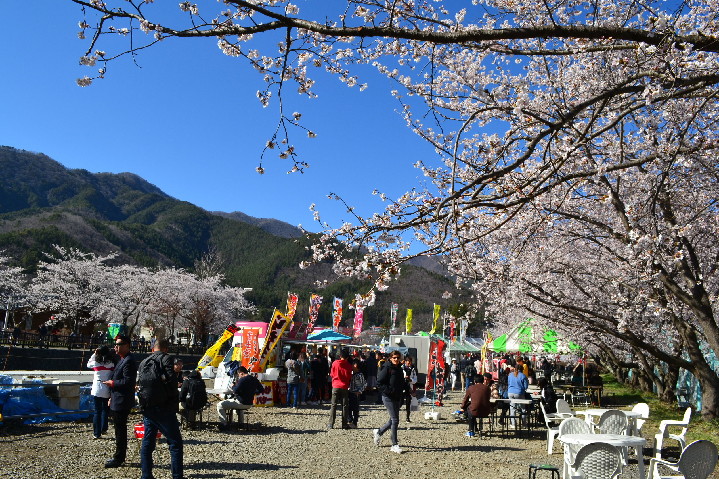 On my walk around Lake Kawaguchi, I encountered a few food stalls that were under the cherry blossoms. Since cherry blossom season is a popular time for tourists to visit the rea, locals take advantage of the opportunity to sell foods and other goods.