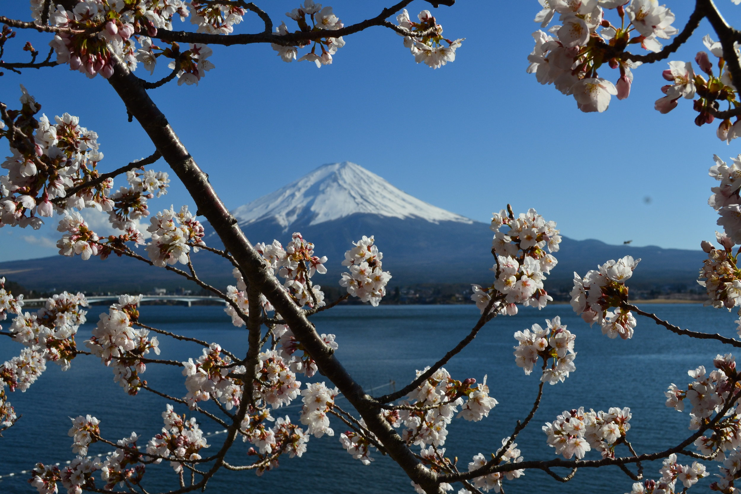 A view of Mount Fuji and the cherry blossoms around Lake Kawaguchi. This is one of my favorite snapshots of the whole trip. There were quite a few people lining up to take a similar shot, so I'm glad I got to get one as well.
