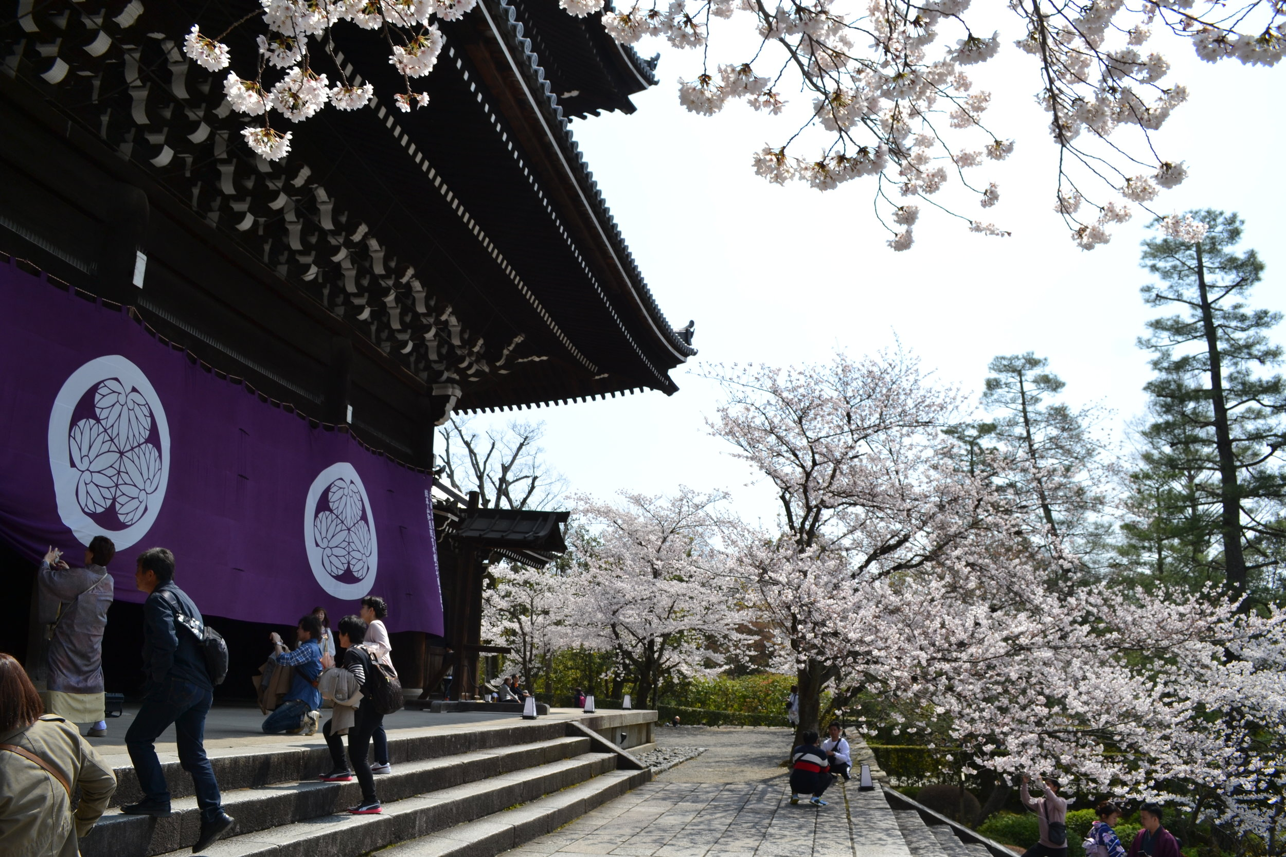 Many staris led up the entrance of the gate and I enjoyed seeing the juxtaposition of traditional temple architecture with the cherry blossom trees.