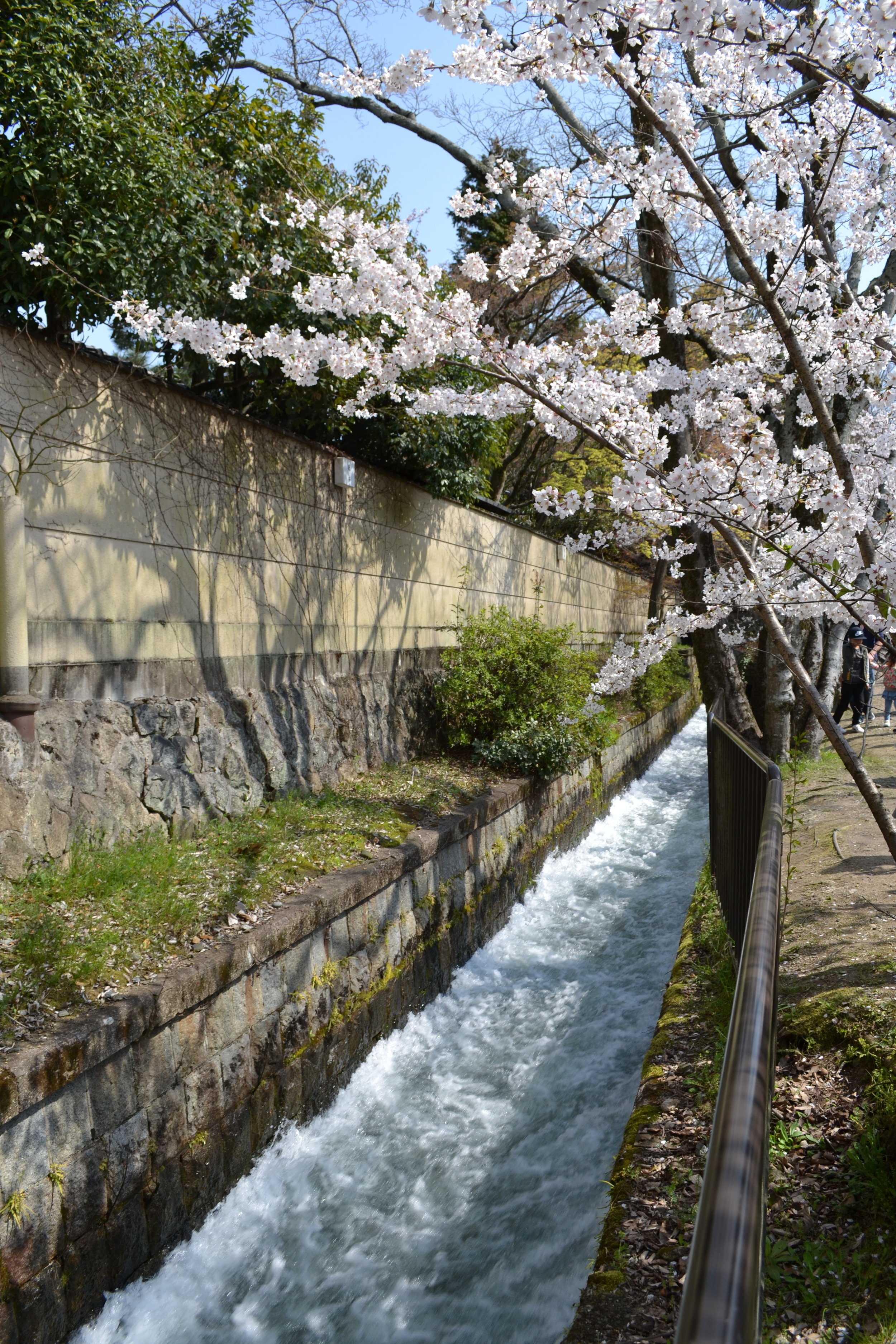 A view of the water rushing down with cherry blossoms at the top. I followed the water to the canal next.