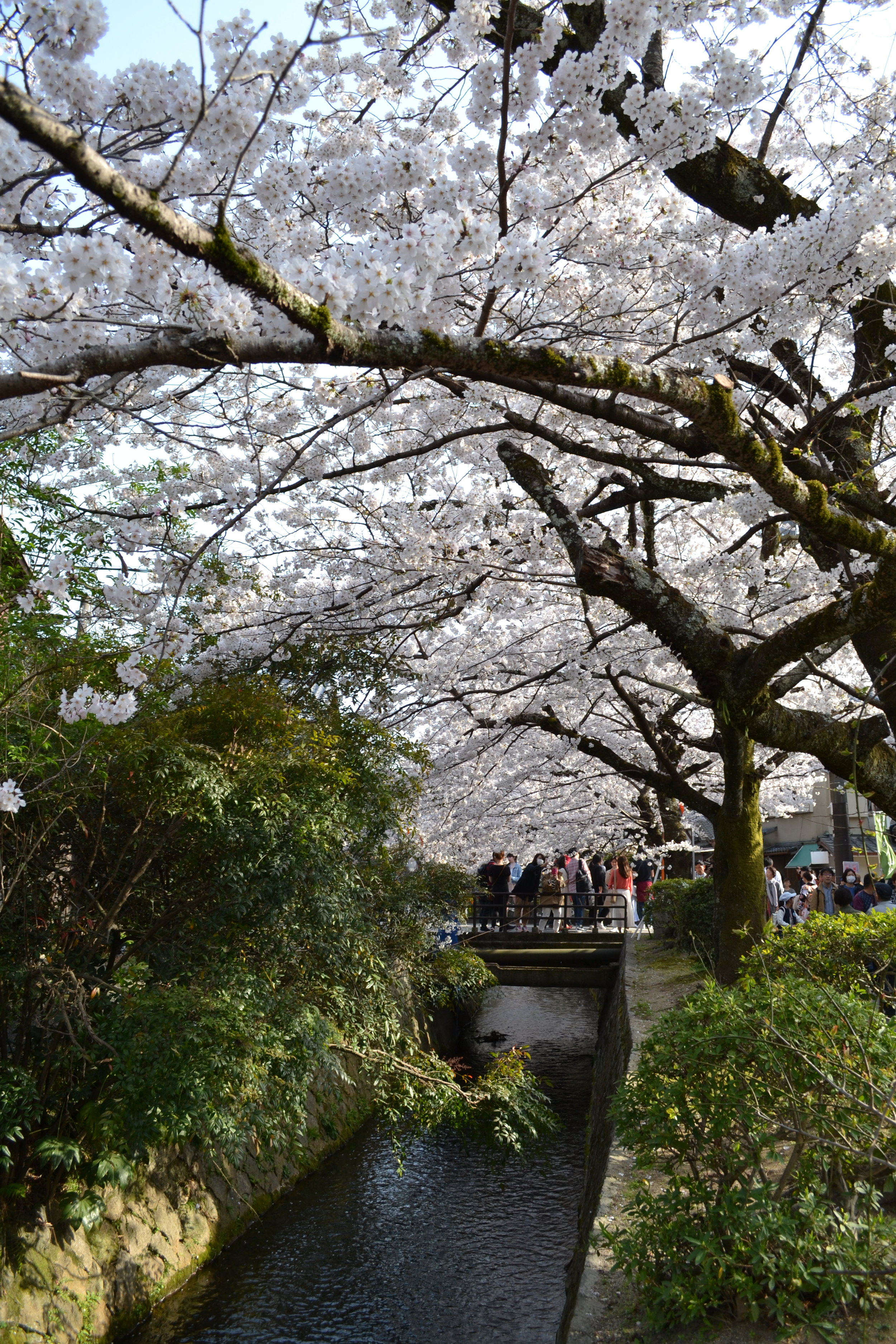 I took this picture standing on the mini bridges of the canal, which is connected to Okazaki Canal near Heian Shrine where I visited before Philosopher's Path. There were many people on the other bridge in the distance, probably taking a close picture of the cherry blossoms.