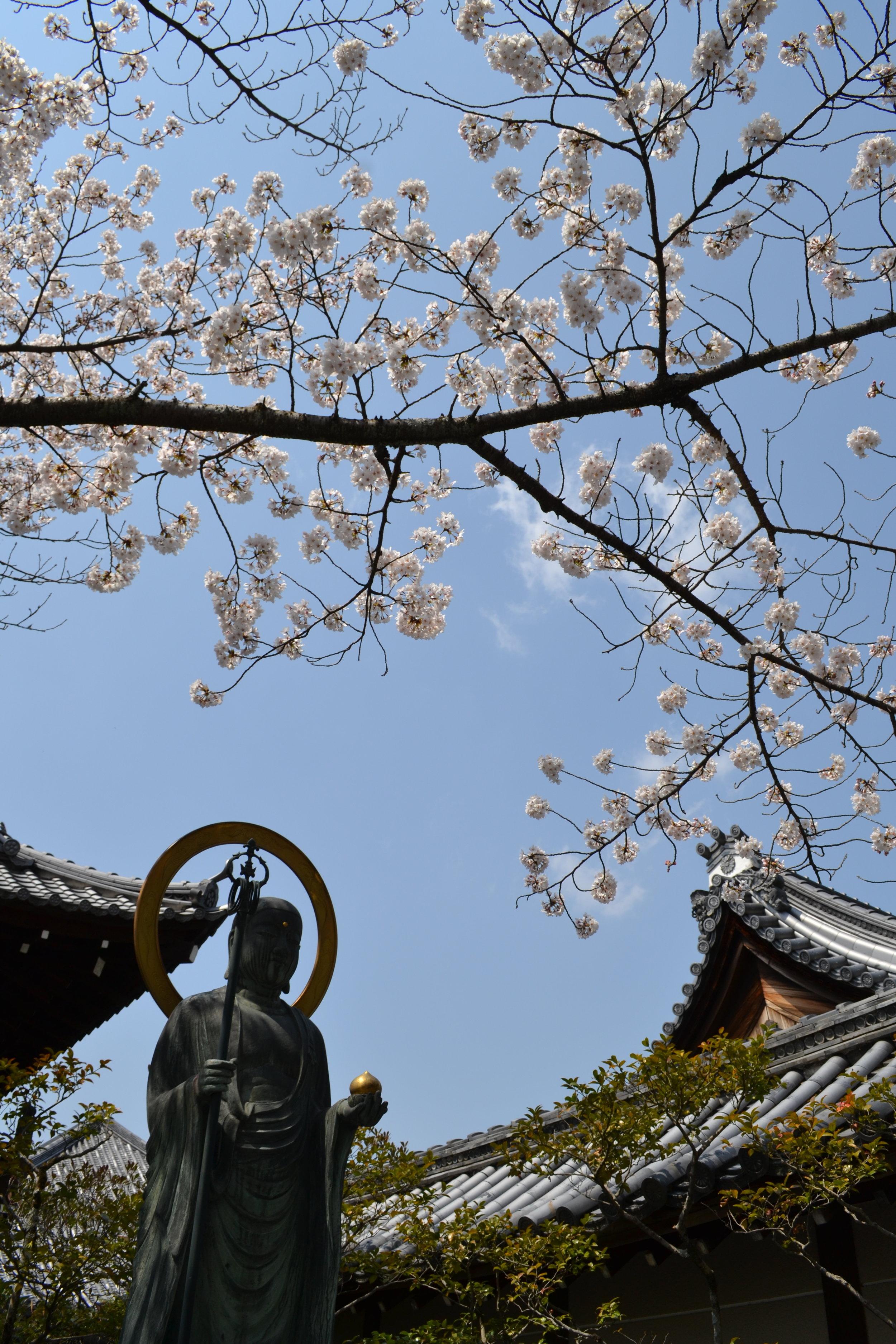 Me gusto este vista de las flores sakuras arriba de la estatua de Buda. Hay muchos templos pequeños en las calles de Kioto entonces siempre estoy descubriendo nuevos templos.