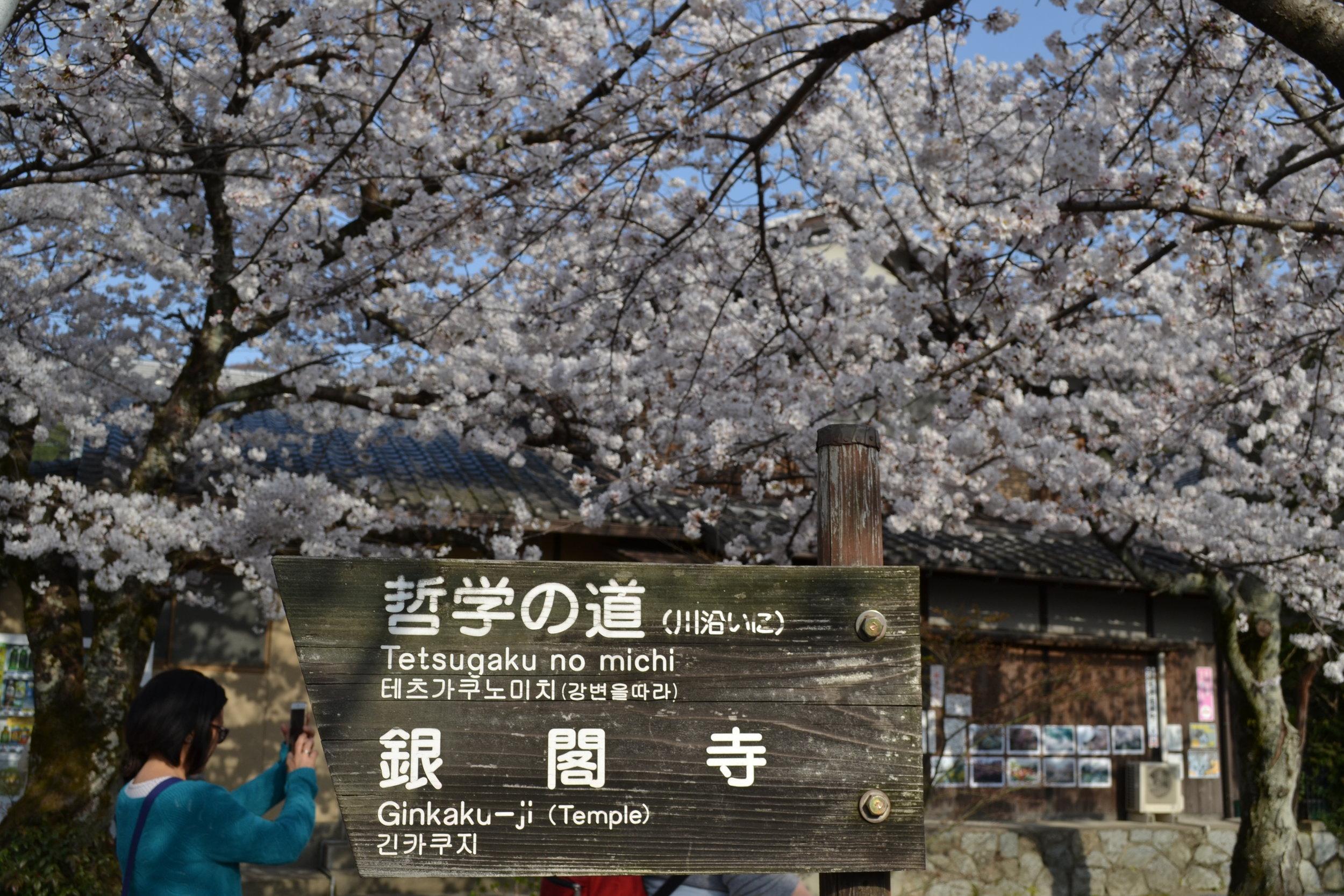 Tome un foto de este letrero indicando la direcciones del templo de Ginkakuji. Solo en Japón he visito letreros hecho de madera.