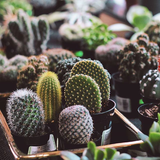 A burning question for this week's #humpday ... Cacti or Succulents, which do you prefer?? I'm intrigued 🌵 . . . #melonandink #colourfulcactus #succulents #cactilover #succulentlover #brandingdesign #branding101 #houseplantlove #houseplants #femalepreneur #onegirlband #womeninbusiness #dowhatyoulovelovewhatyoudo #brandstylist #visualidentity #brandstyling #branddesigner #brandingidentity #designstudio #designeveryday #graphicdesigner #graphicdesign #photographyy #creativeoutlet #logodesigner #brandstrategy #brandstrategist