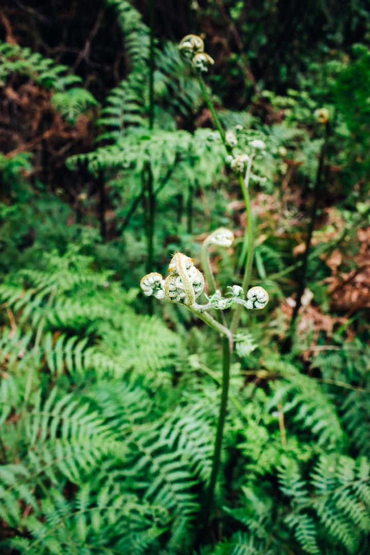 Kingfisher Trail-9.jpg