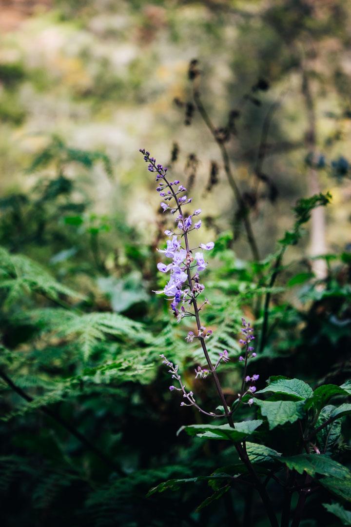 Kingfisher Trail-10.jpg