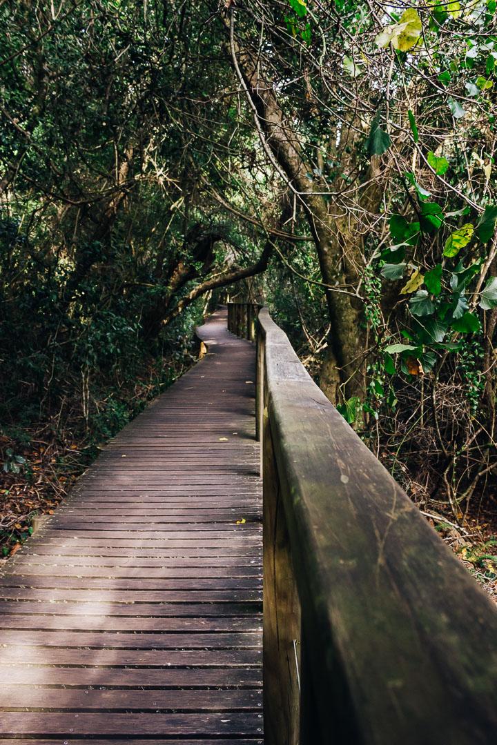 Kingfisher Trail-13.jpg