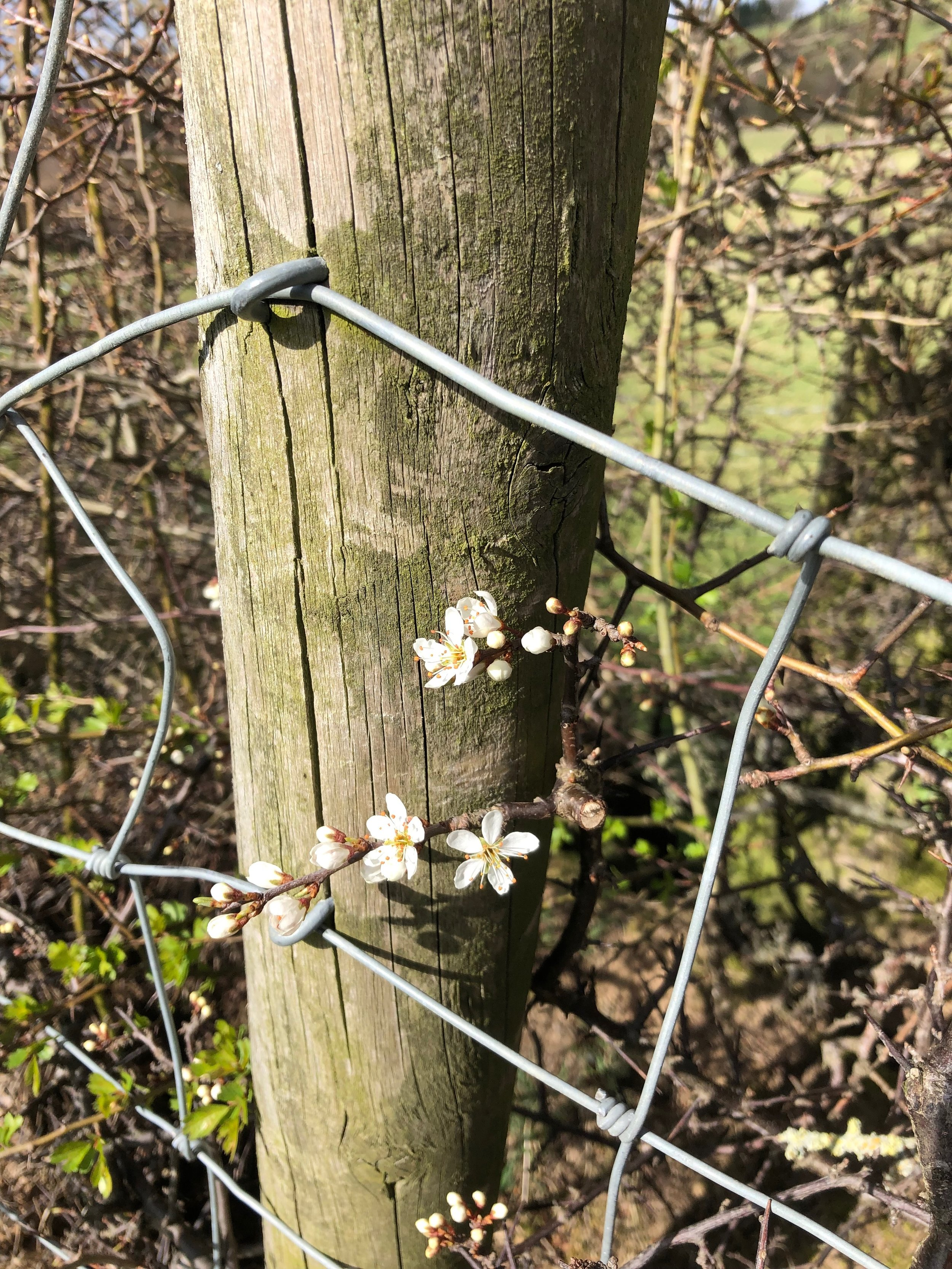 found this gorgeous blossom. we spent about half an hour taking pictures, it was sheltered from the wind and nice and warm.