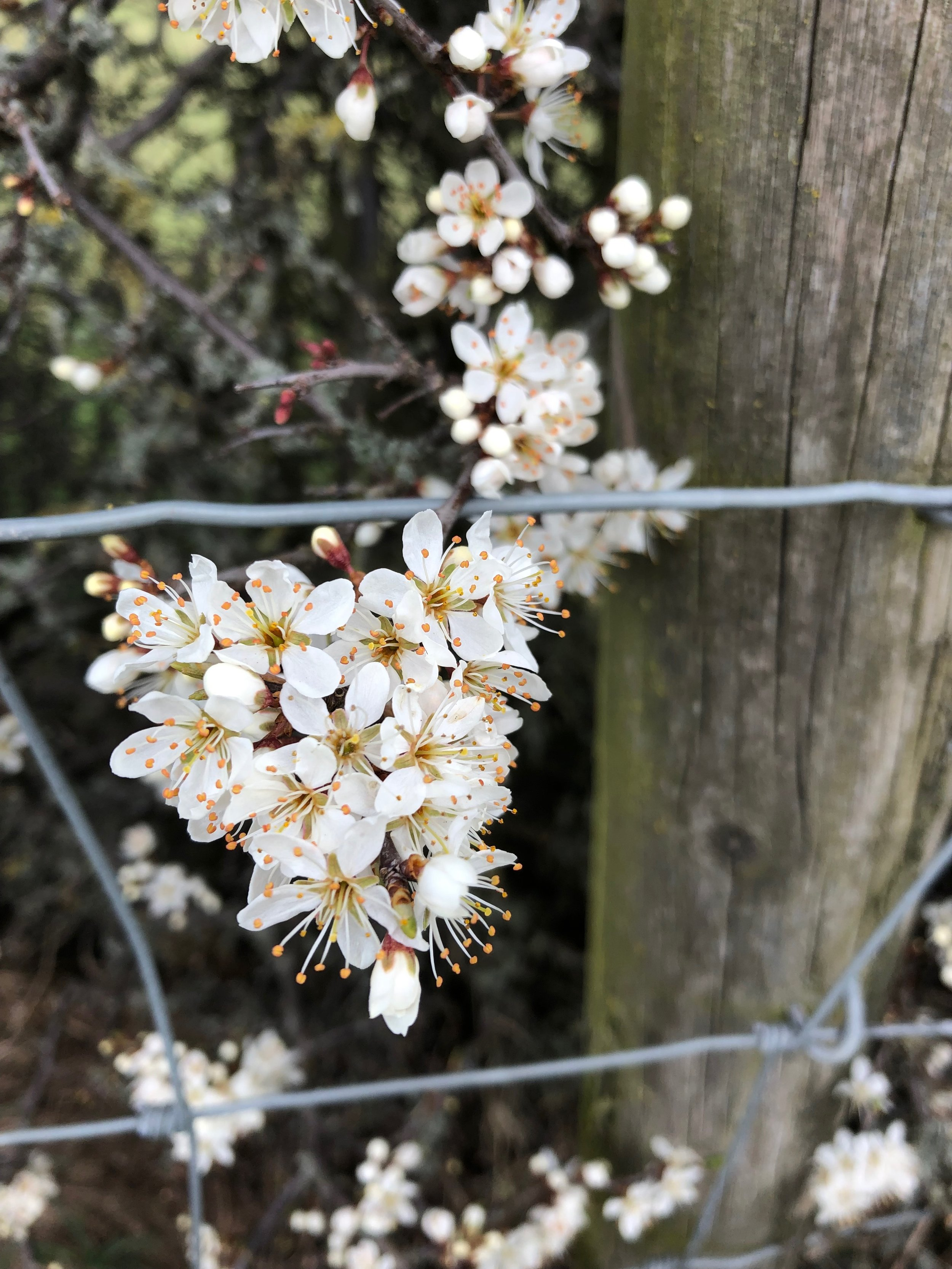 I found this gorgeous blossom. we spent about half an hour taking pictures, it was sheltered from the wind and nice and warm.