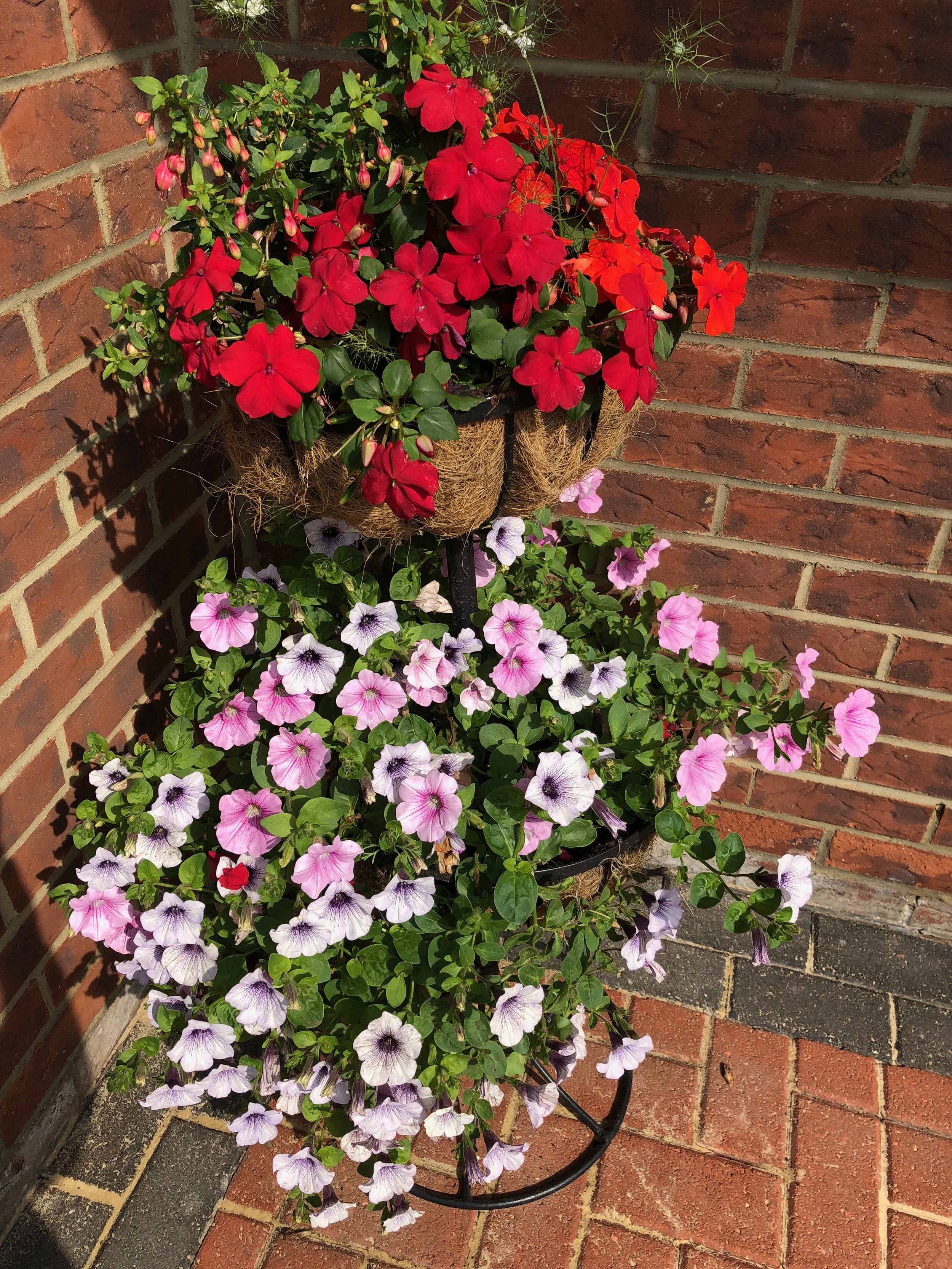 Hanging baskets in full bloom