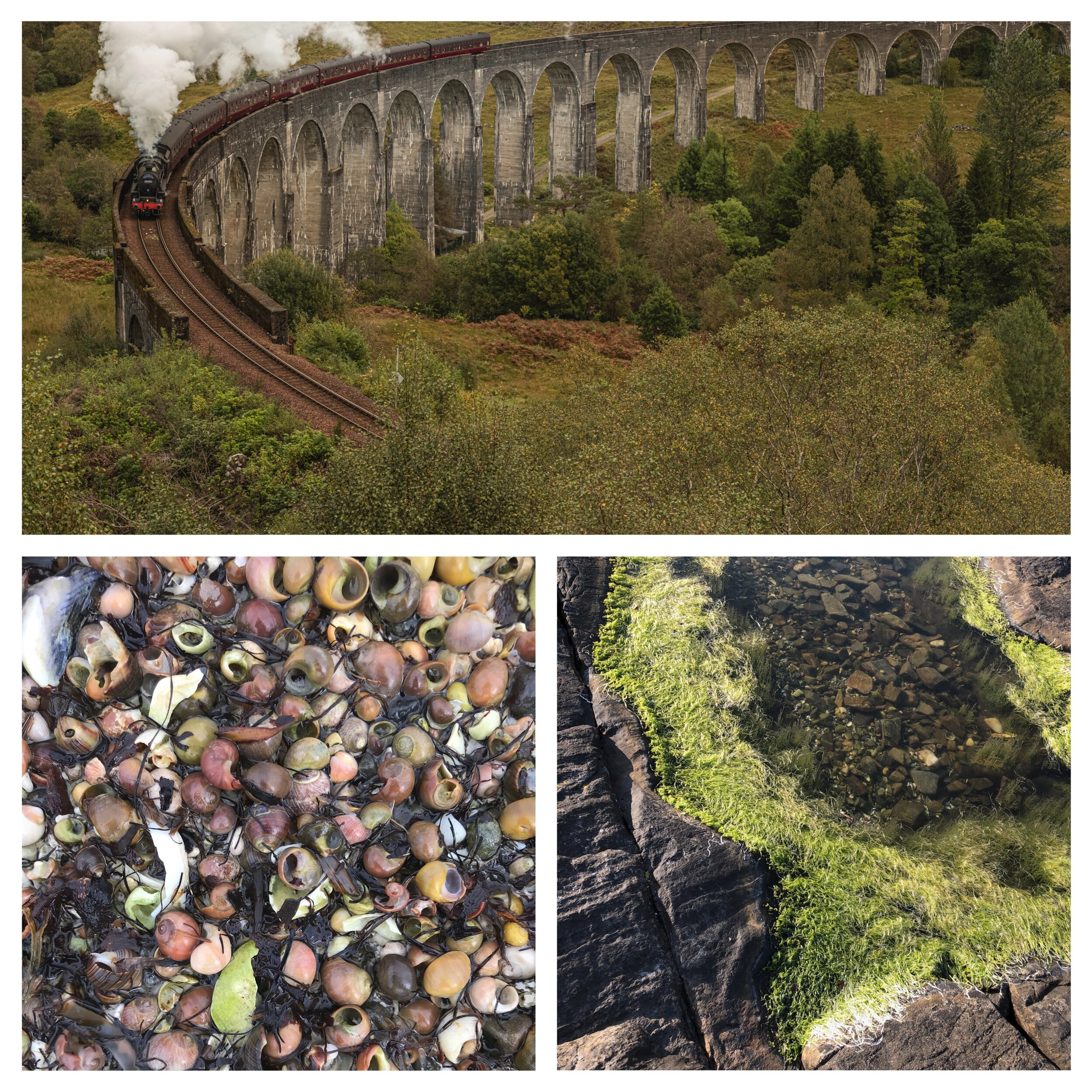 Jacobite steam train going over the Glenfinnan viaduct.