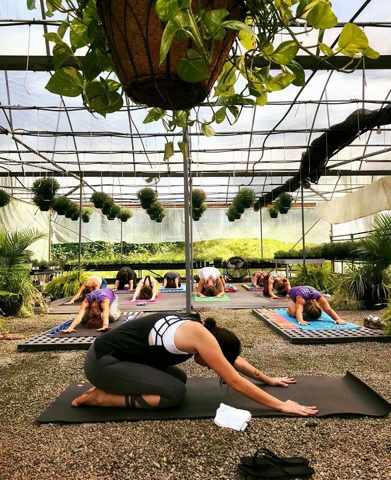 yoga nickys.jpg