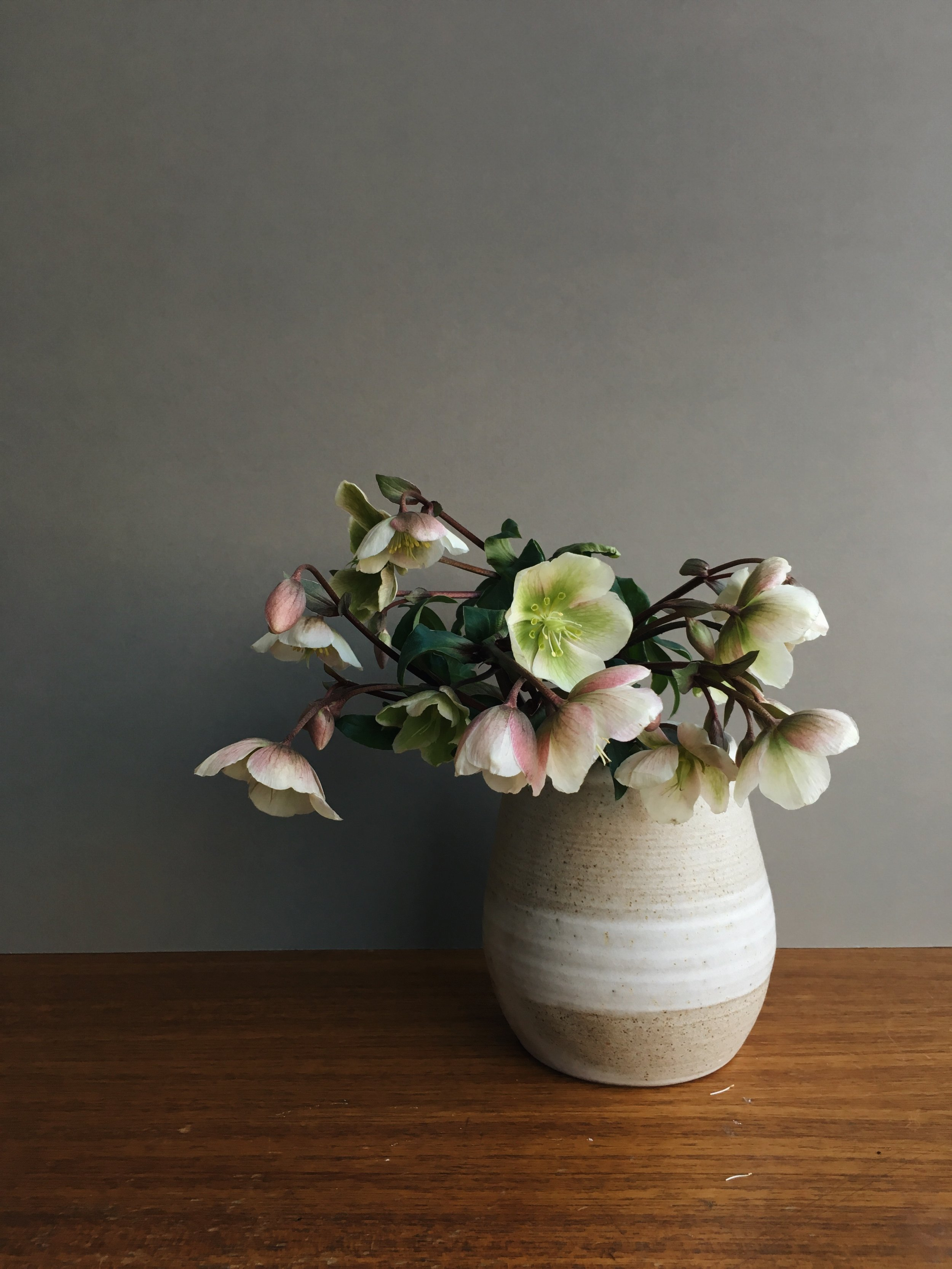 SINGLE STEMS - Hellebore 'magnificent bells' in Stone vase by Carla Murdoch.From £2.00 per stem
