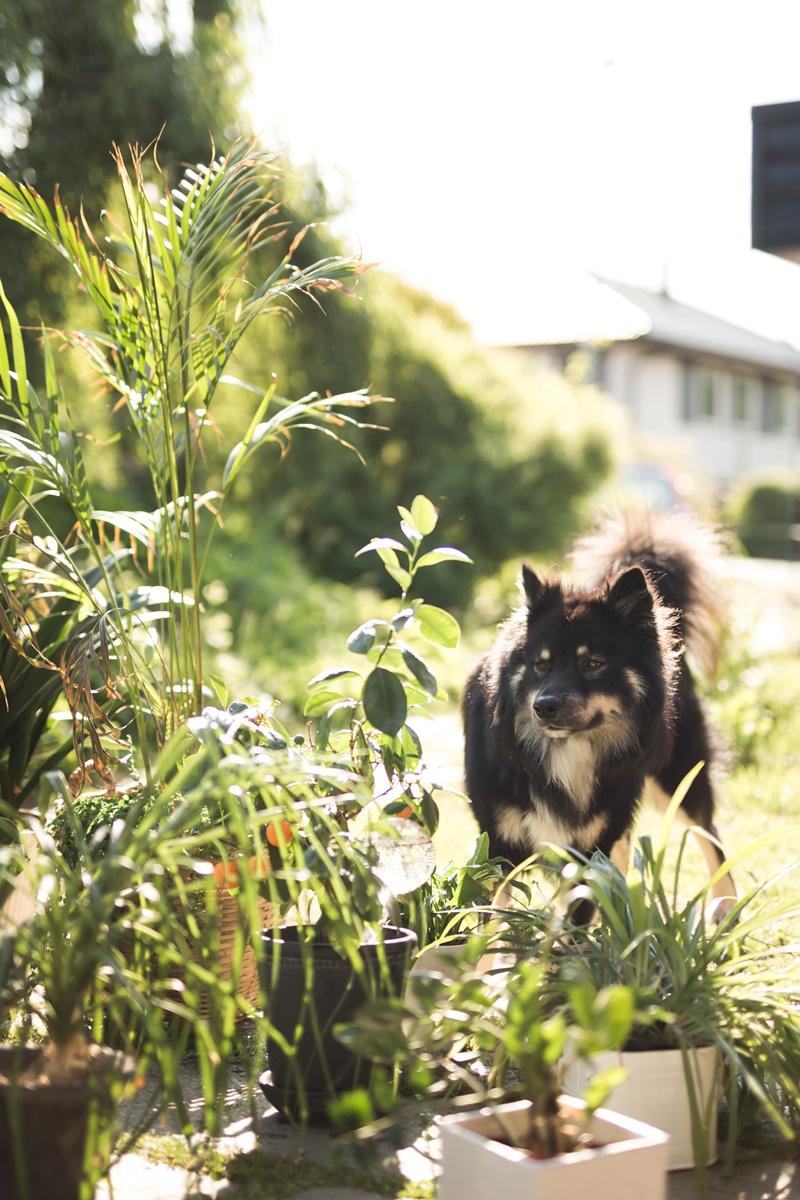mittsommarjag insta challange 2019 Fröken Foto frokenfoto.se fotograf Malin Richardsson miibellephoto (7).jpg