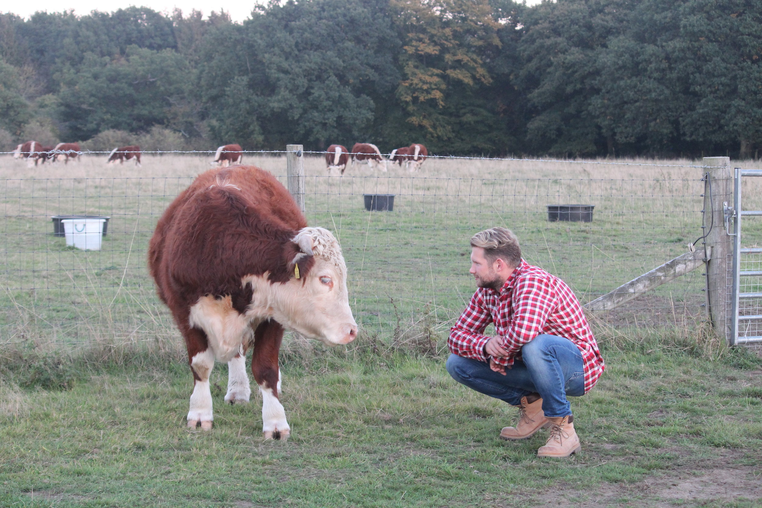 Grass Fed Pasture For Life Farming