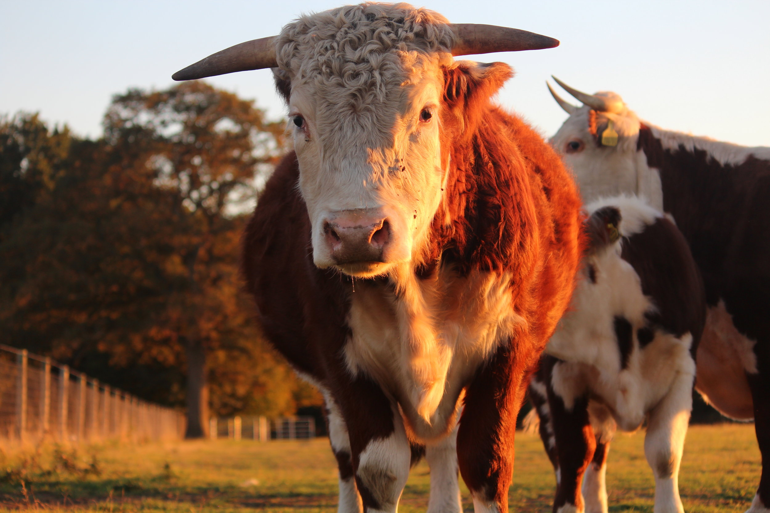 Ethical Farming Grass Fed Farming
