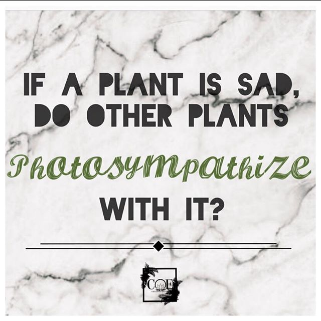 Plant joke for the day! Call us if you're looking for 🌲🌳🌴ANY💐🌿🍃🌱 plants. We may even tell you a joke SO FUNNY it'll make you wet your plants 🤔😂