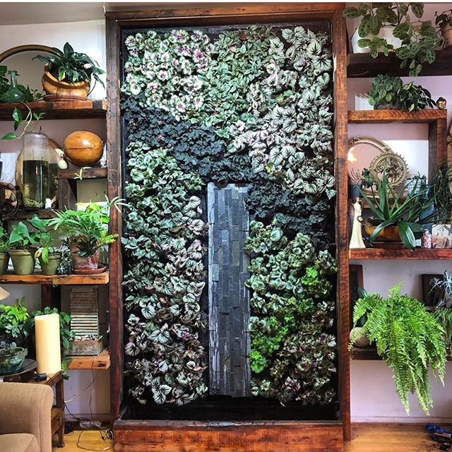 How gorgeous is this plant wall featuring a waterfall from @eco.brooklyn? These Rex Begonia's are absolutely stunning! Maybe DO go chasing waterfalls. ❤️❤️❤️