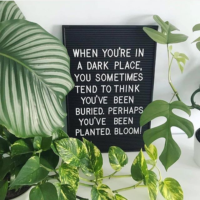 Some great Saturday motivation! 🏆Lets bloom where we are planted. Repost from @houseofplantlovers 📸 via @motherofgreenplants