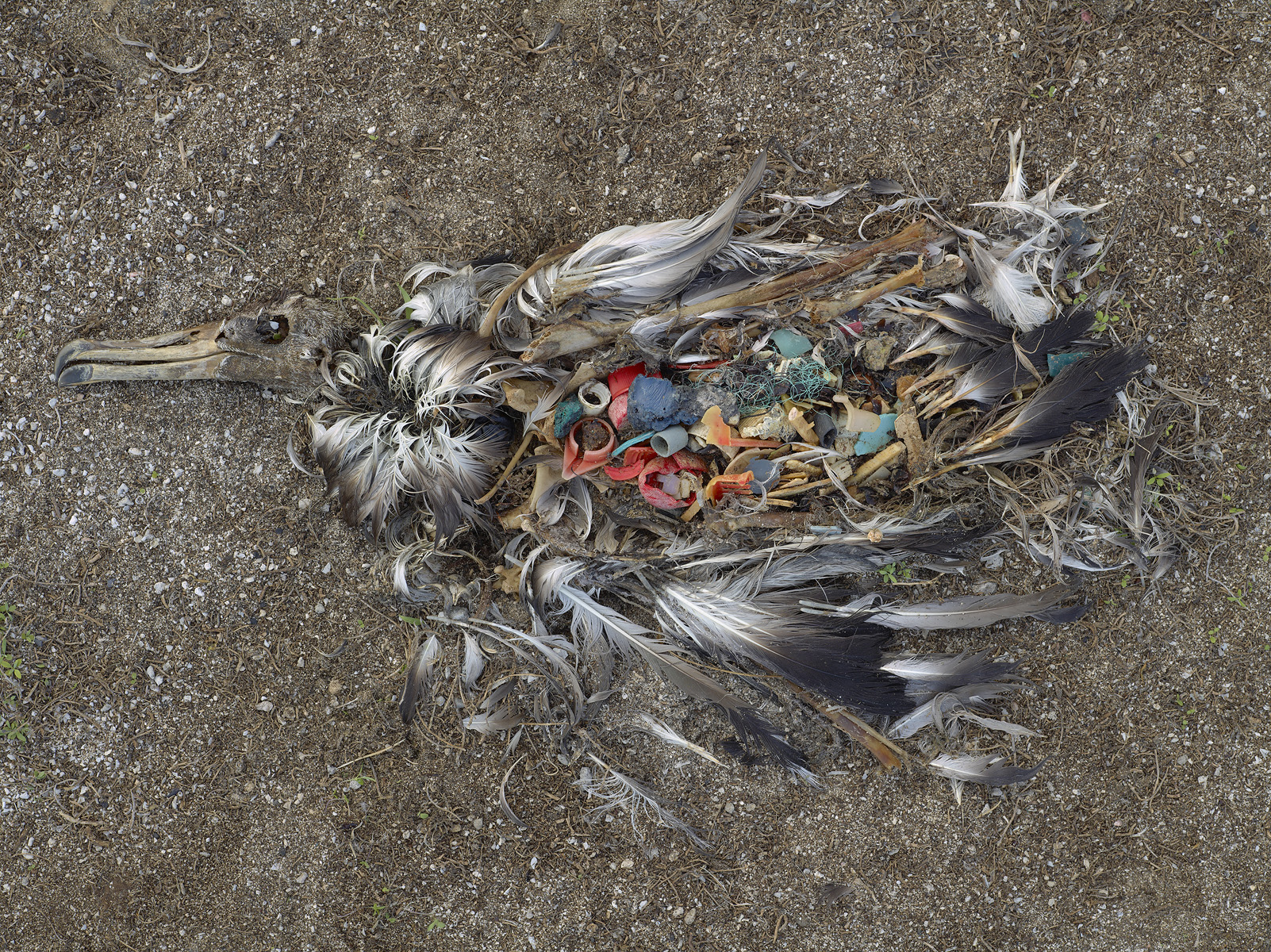 100,000 marine mammals and over 1 million seabirds die from ingesting plastic every year
