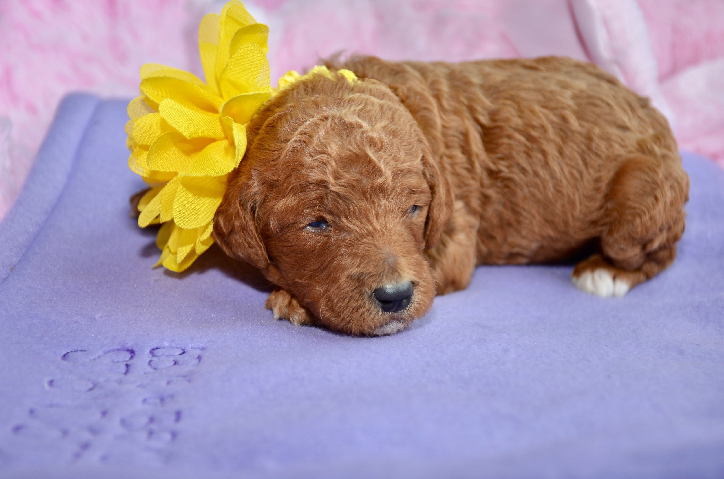 Bella Girl Yellow.jpeg