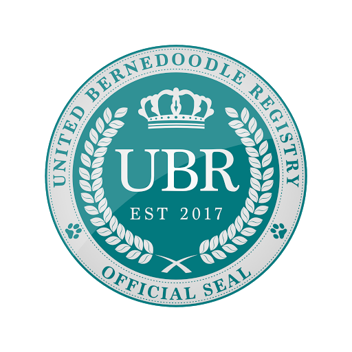 united-bernedoodle-registry-logo-color-on-white-with-glass.png
