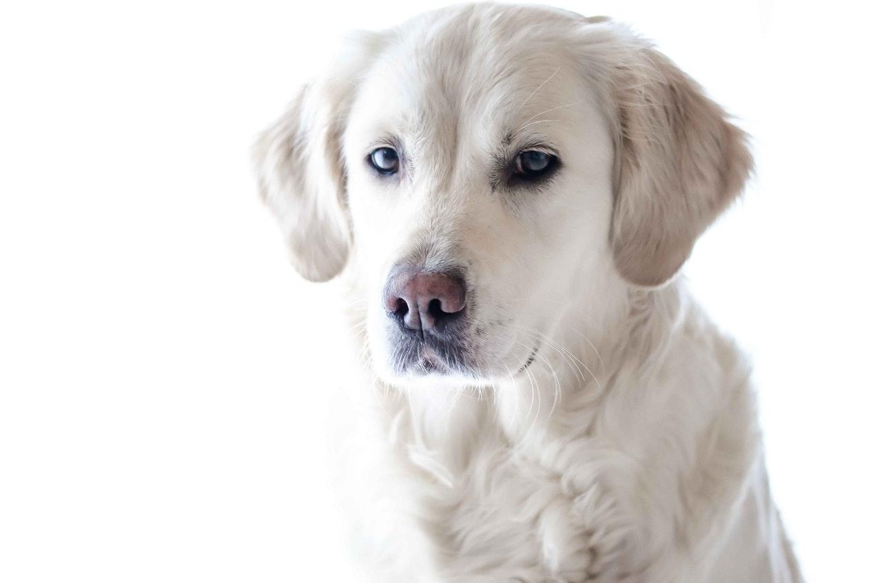 wildlife-photography-pet-photography-dog-animal-159541.jpeg