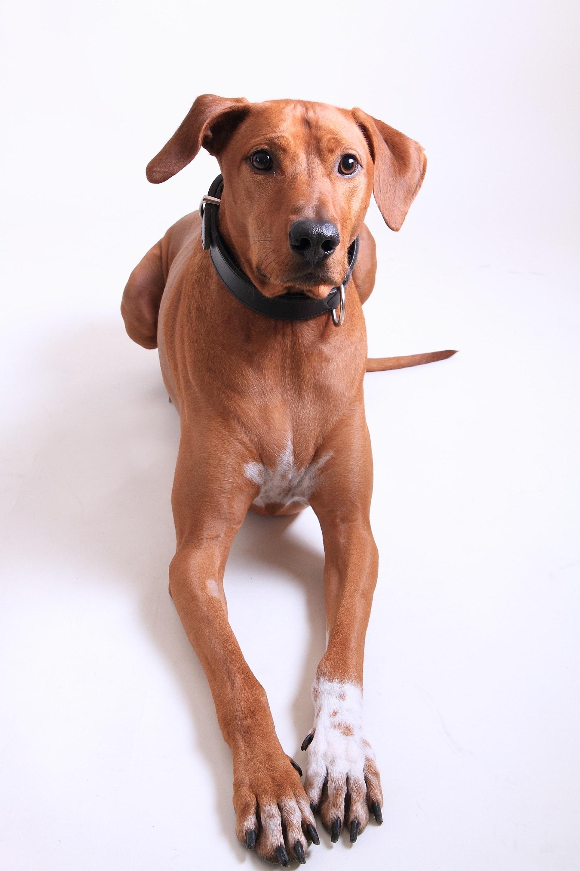 animal-breed-canine-460845.jpg