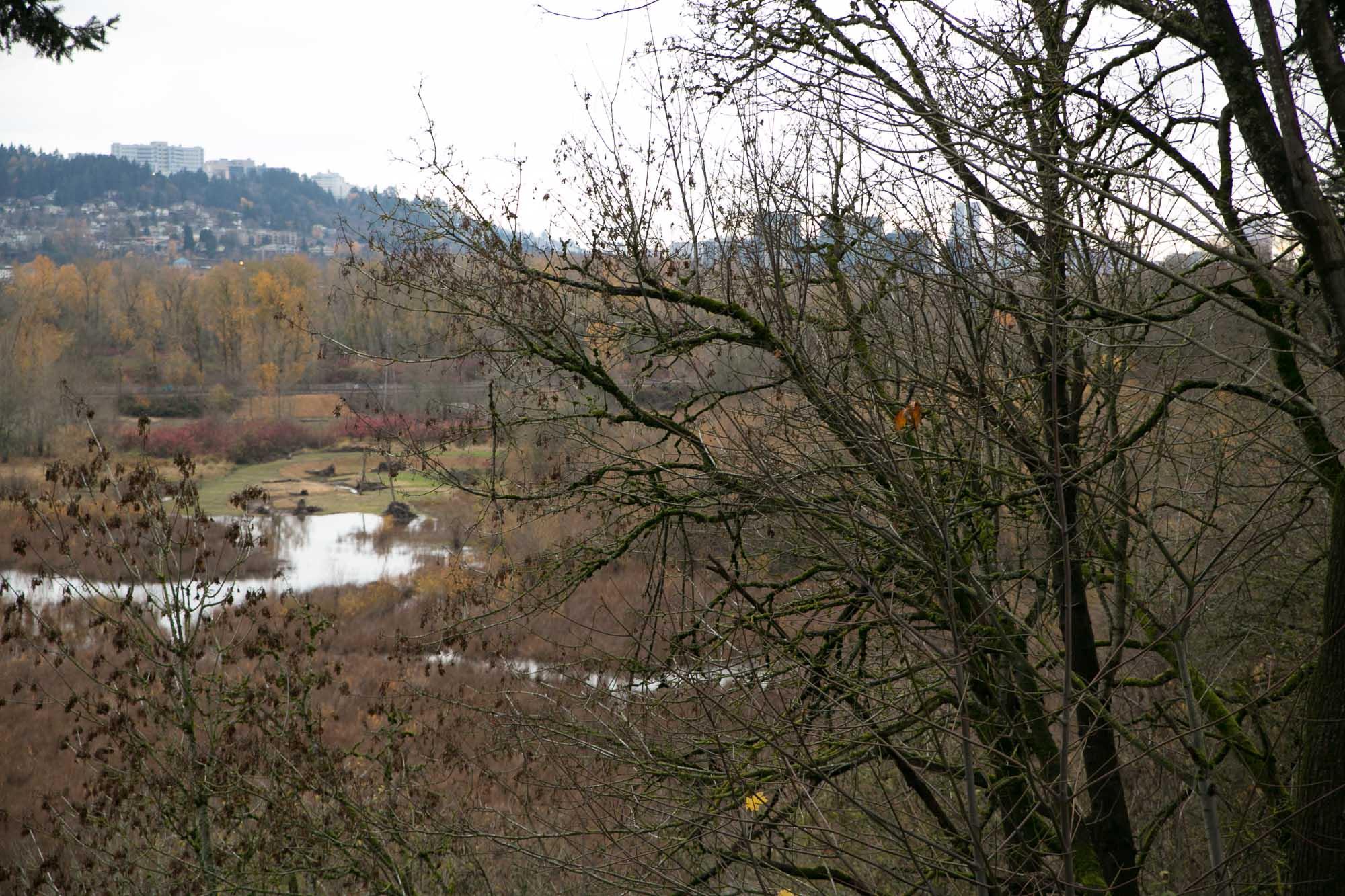 visit-sellwood-moreland-business-alliance_oaks-bottom-nature-preserve-park-3.jpg