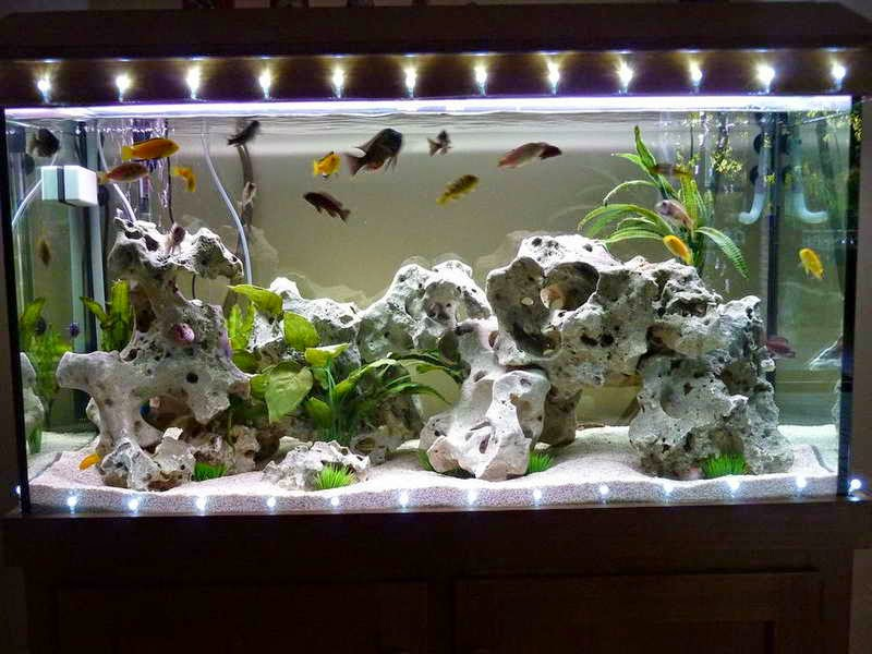 aquarium-decorations-canada.jpgaqua
