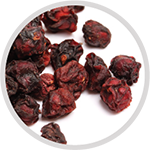 SCHISANDRA BERRY  is a potent general tonic. It decreases fatigue, promotes endurance, and enhances physical performance as proven in human studies. Revered in Asian countries for it's overall anti-aging and anti-inflammatory effects, soon to be discovered and promoted worldwide.