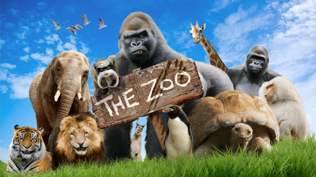 The Zoo   Take a trip to a zoo like no other as Jürgen and his oddball gang of gorillas reveal a secret world of talking animals.