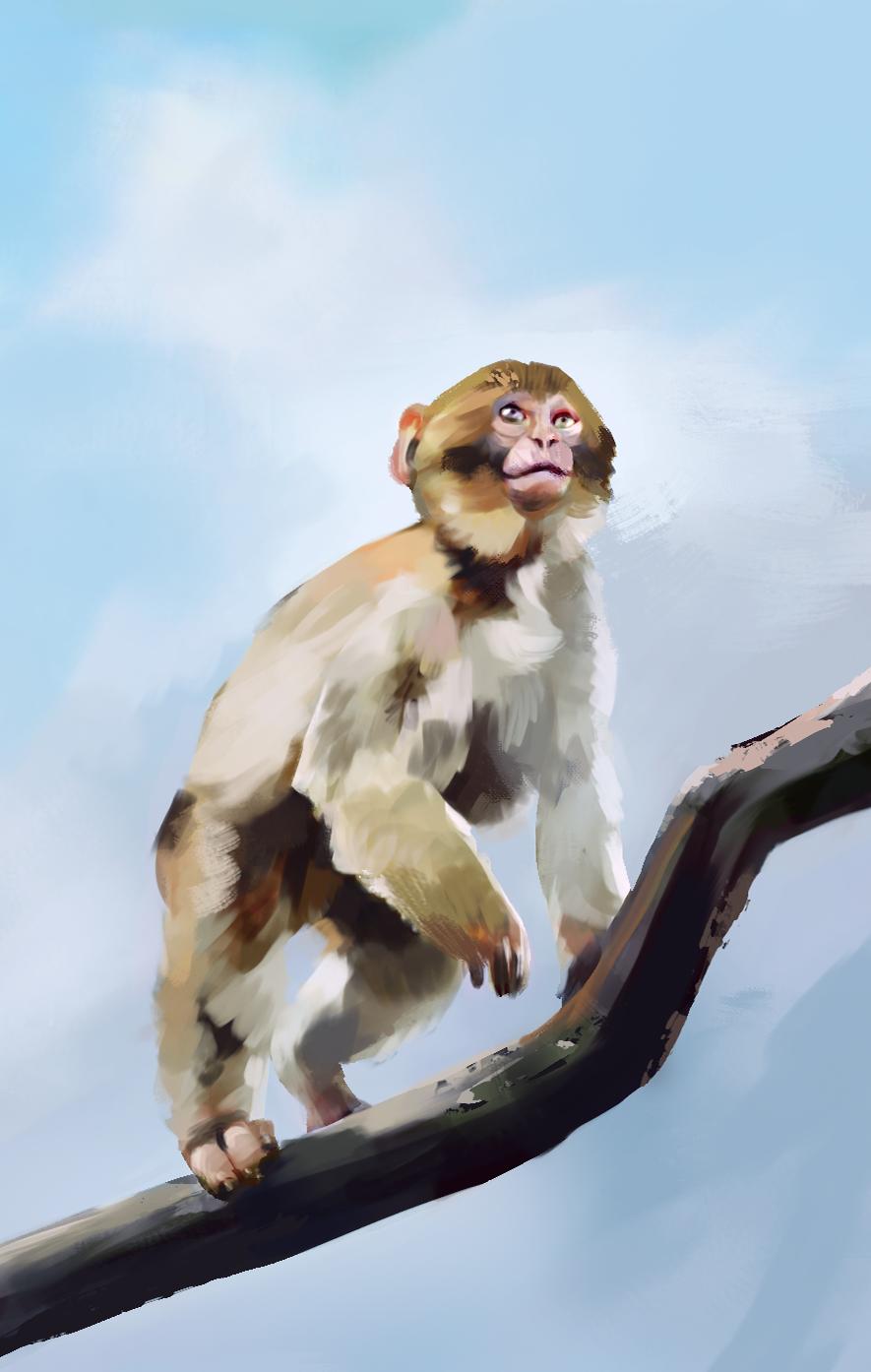 study_monkey-03_2h.png