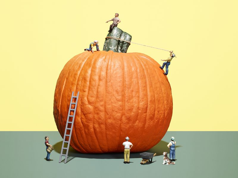 - On Instagram, there's an influencer for everything. Even pumpkins.