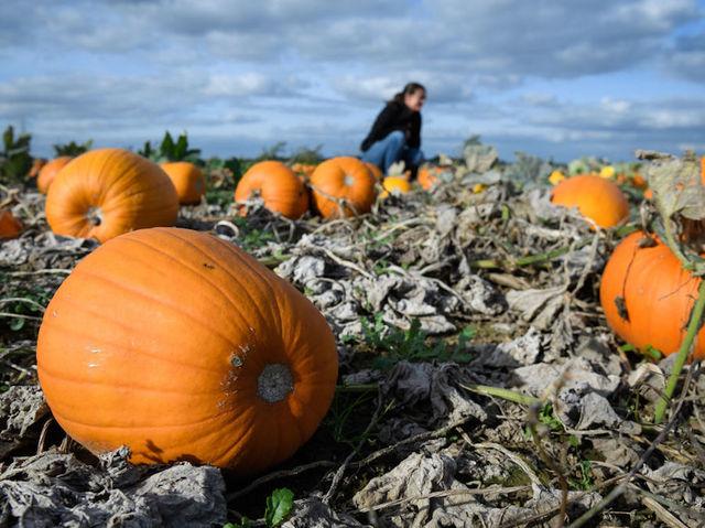 OCTOBER 26,2018 - 40 ways to celebrate National Pumpkin Day