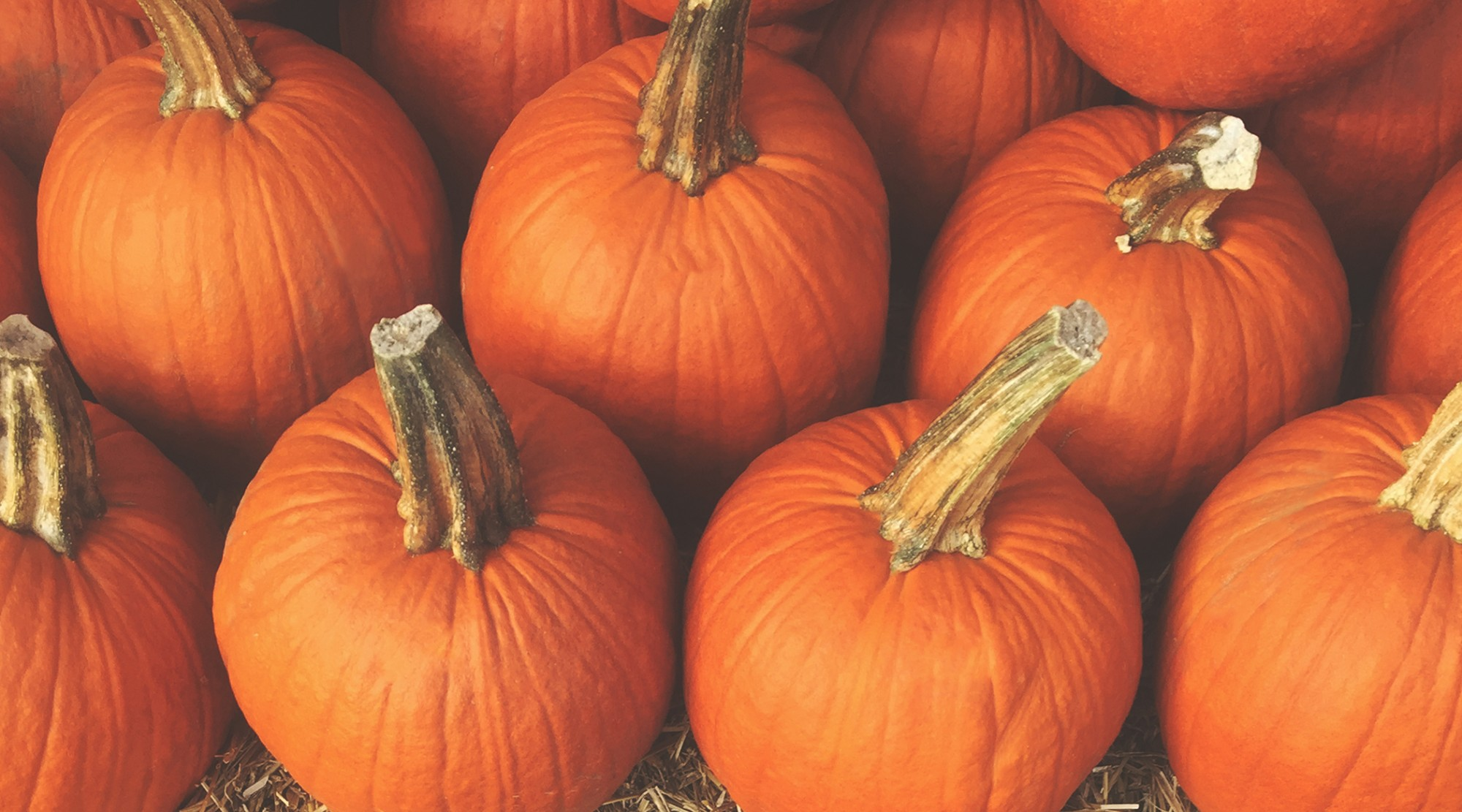 NOVEMBER 17, 2018 - Of mastodons and man... and pumpkinS: HOW PUMPKINS WENT FROM INEDIBLE TO COMMONPLACE (AUDIO)