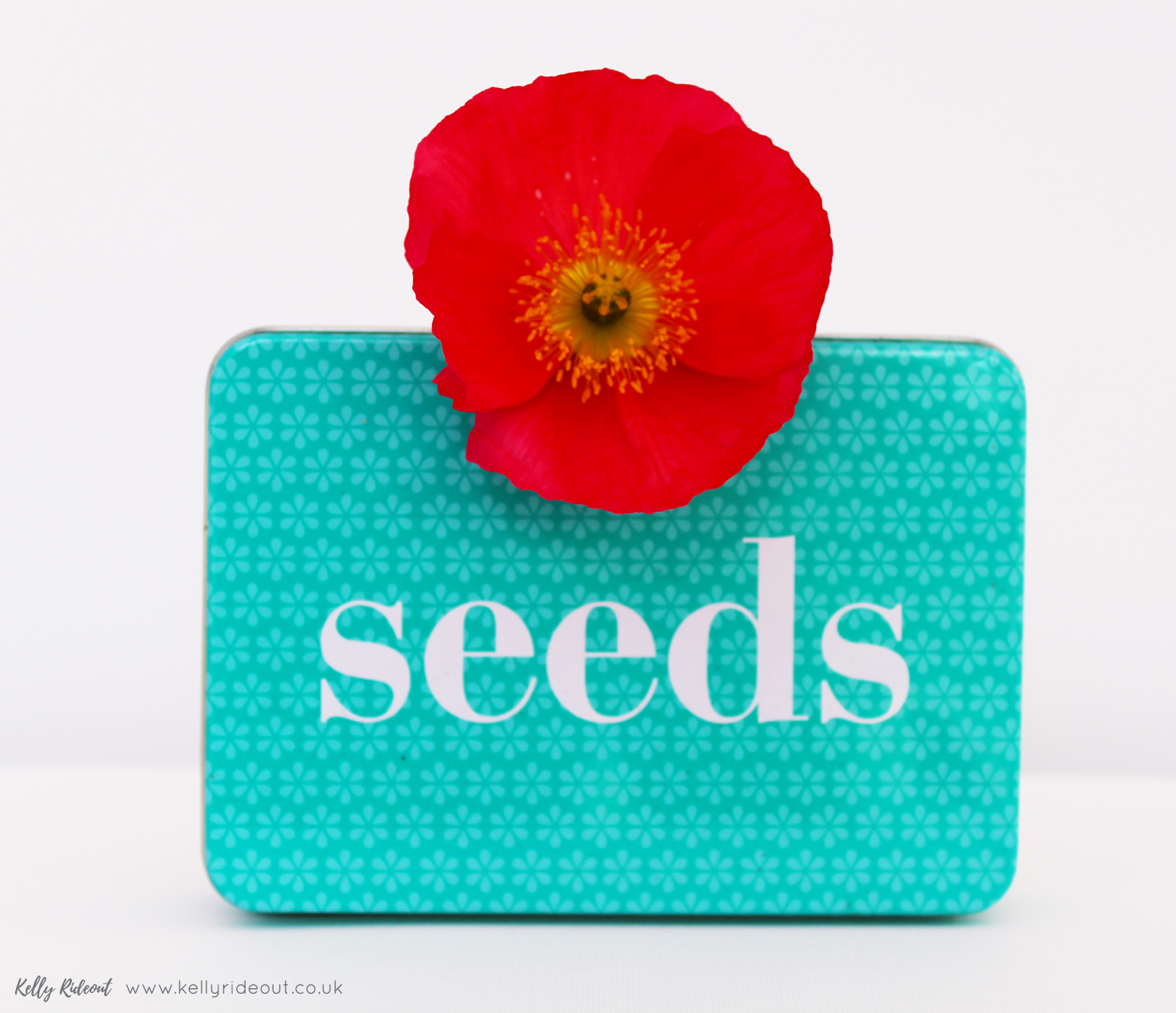 Seeds Iceland Poppies.jpg