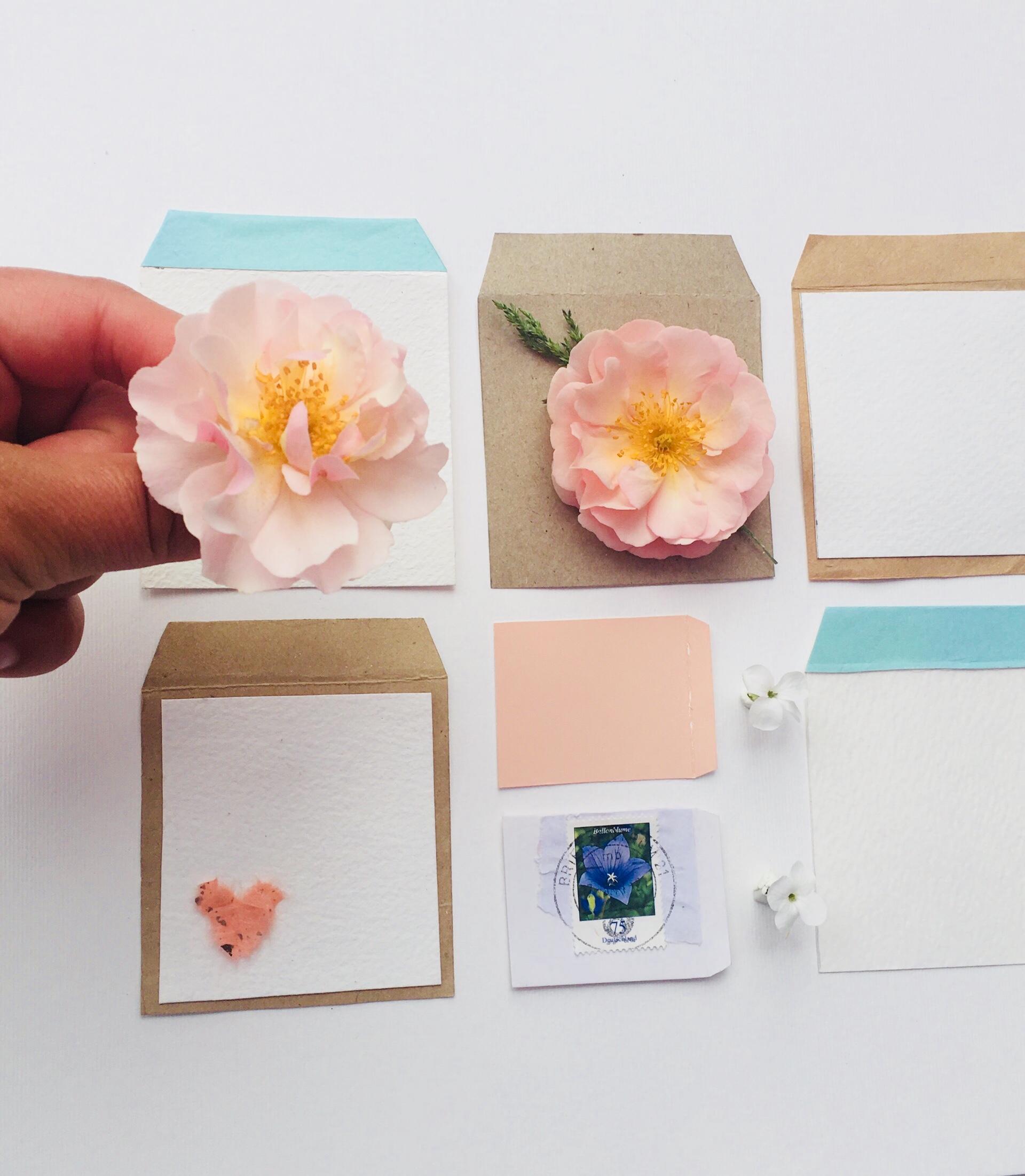 Flower seed packet design.jpeg