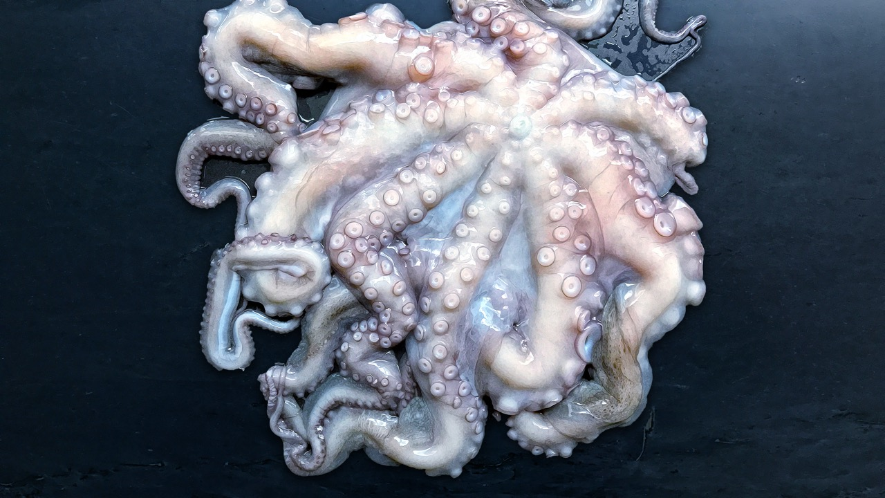 How To Cook An Octopus - …it's easy