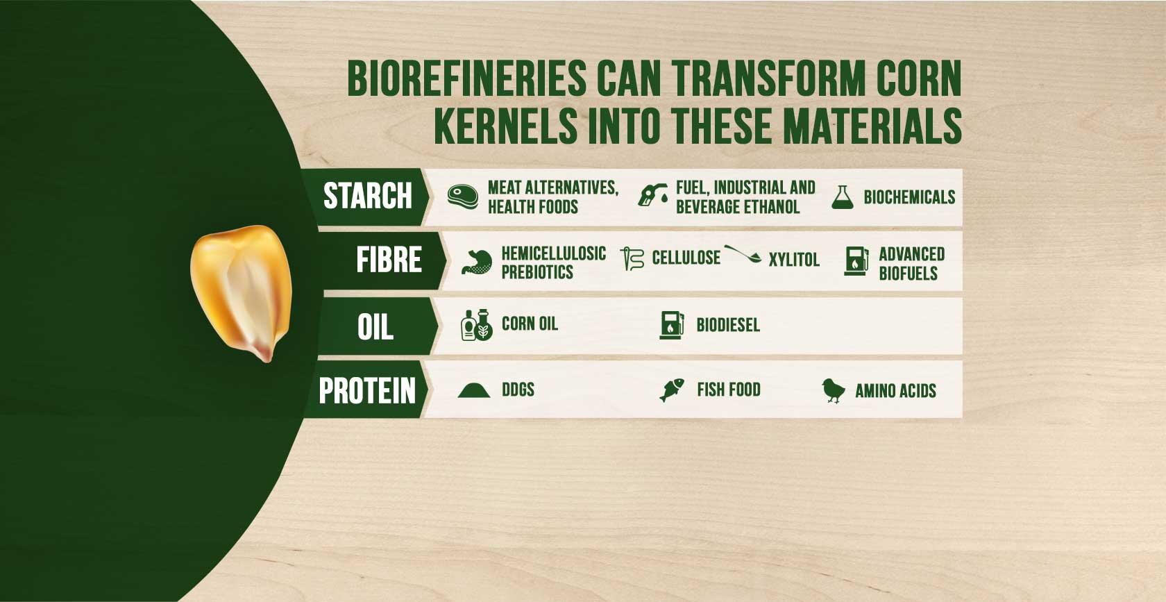 New Corn Kernal info.jpg