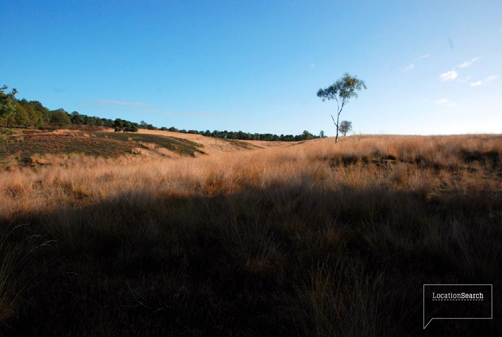 landscape-21.jpg
