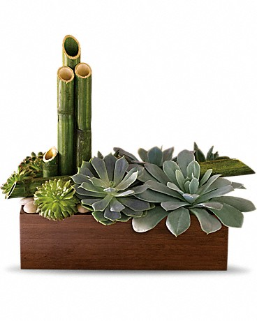 Peaceful Zen Garden    Thirsting for a gift that is contemporary, beautiful and inspires a soothing sense of calm? Look no further than this exclusive Zen garden. Full of stunning succulents, it's super-low-maintenance. It's awesome for an office and in perfect harmony at home. A total of six succulent plants are arranged with river cane and river rocks in a large brown bamboo container.    Buy Now>>