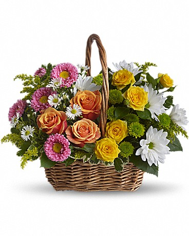 Alfa's Sweet Tranquility Basket    This beautiful gift will be appreciated for its life-affirming brilliance and your thoughtfulness at this time. Brilliant blooms such as orange and yellow roses and spray roses mix with pink matsumoto asters, white daisy spray chrysanthemums, dazzling green button spray chrysanthemums, salal, pittosporum and more in a lovely rectangular basket with a handle.    Buy Now>>
