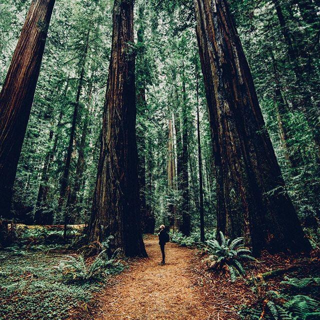 Rückzug in den Wald, um eine neue Perspektive zu erhalten.