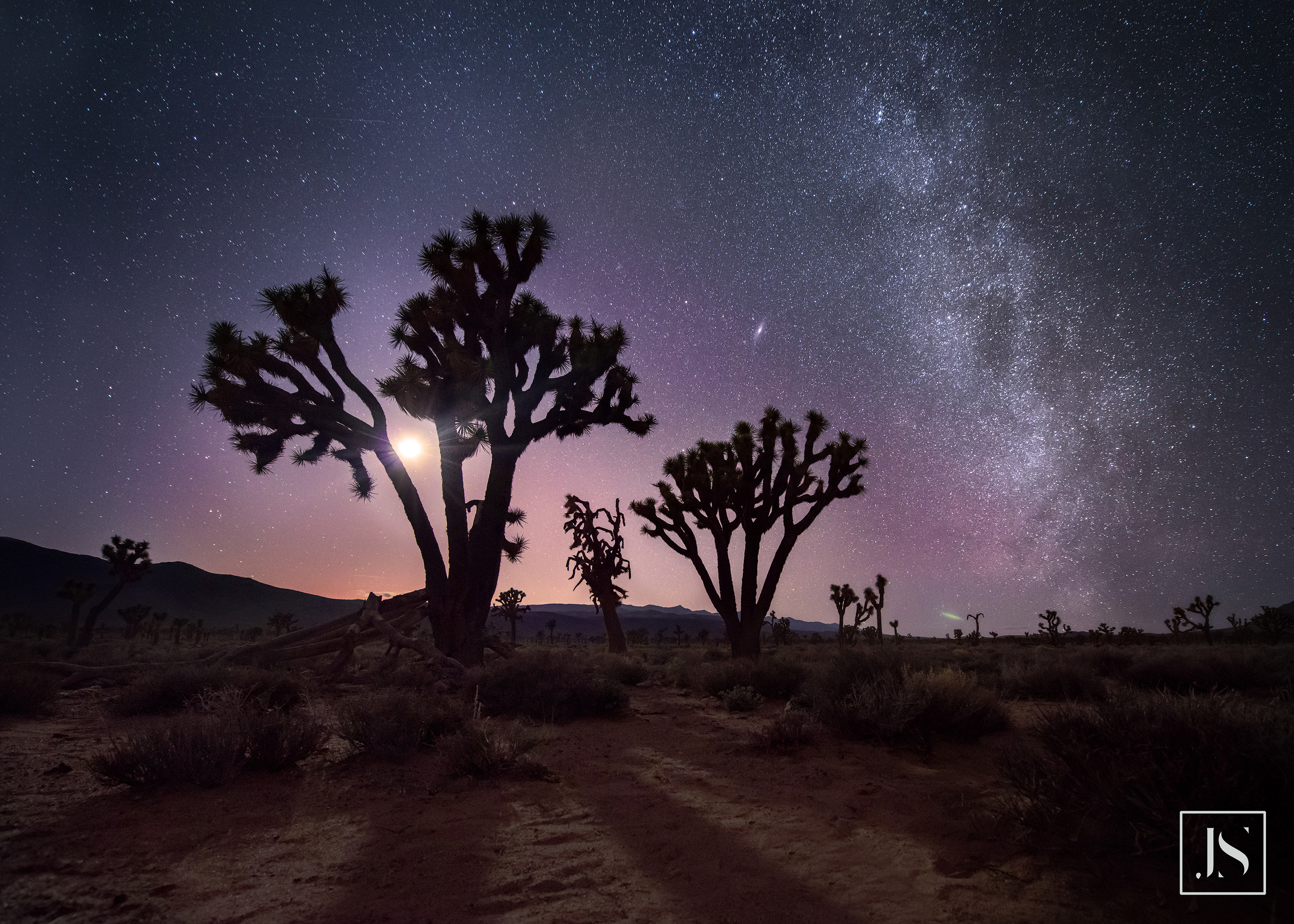 milky_way_joshua_tree.jpg
