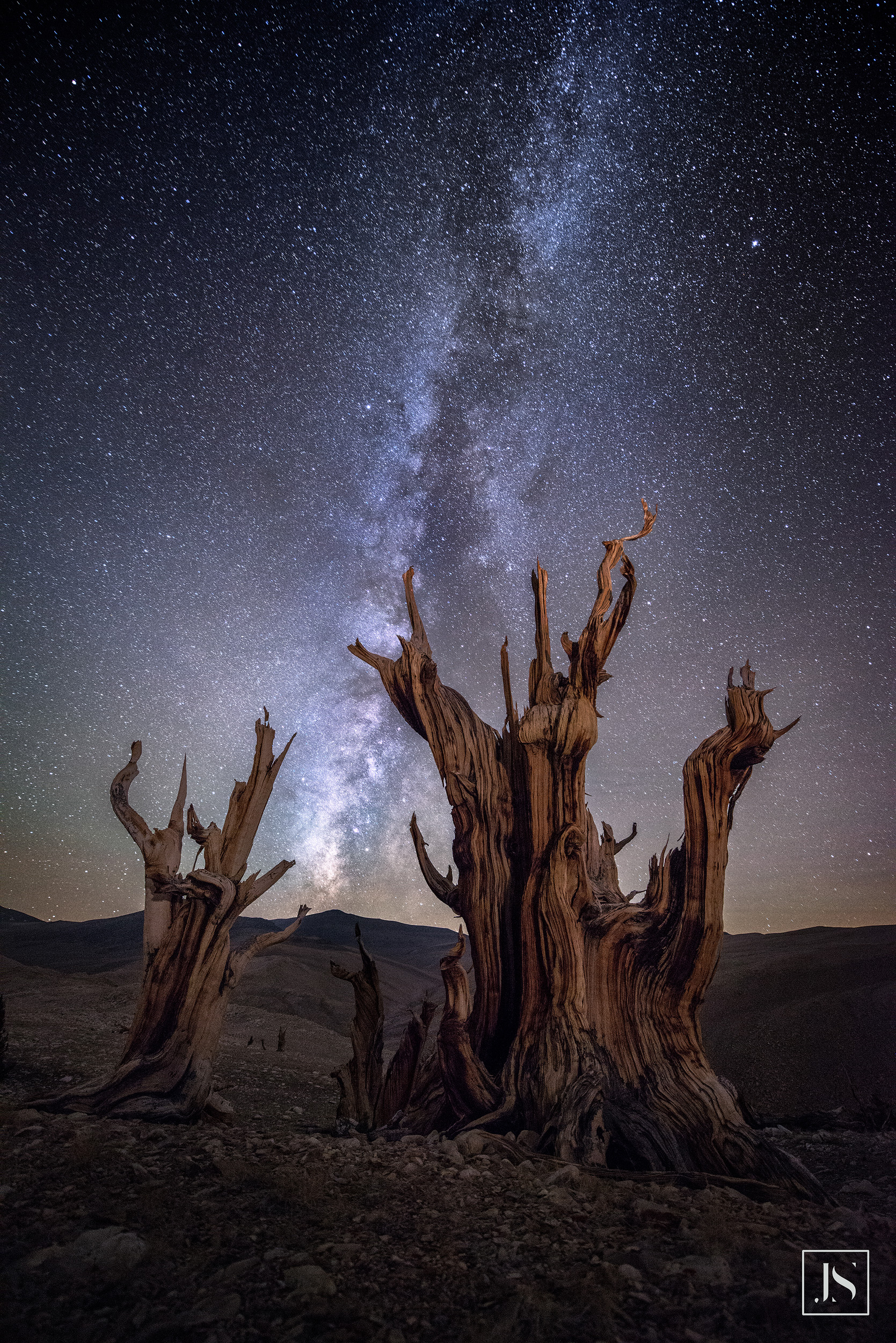 Milky Way over Ancient Bristlecone Pine-2015