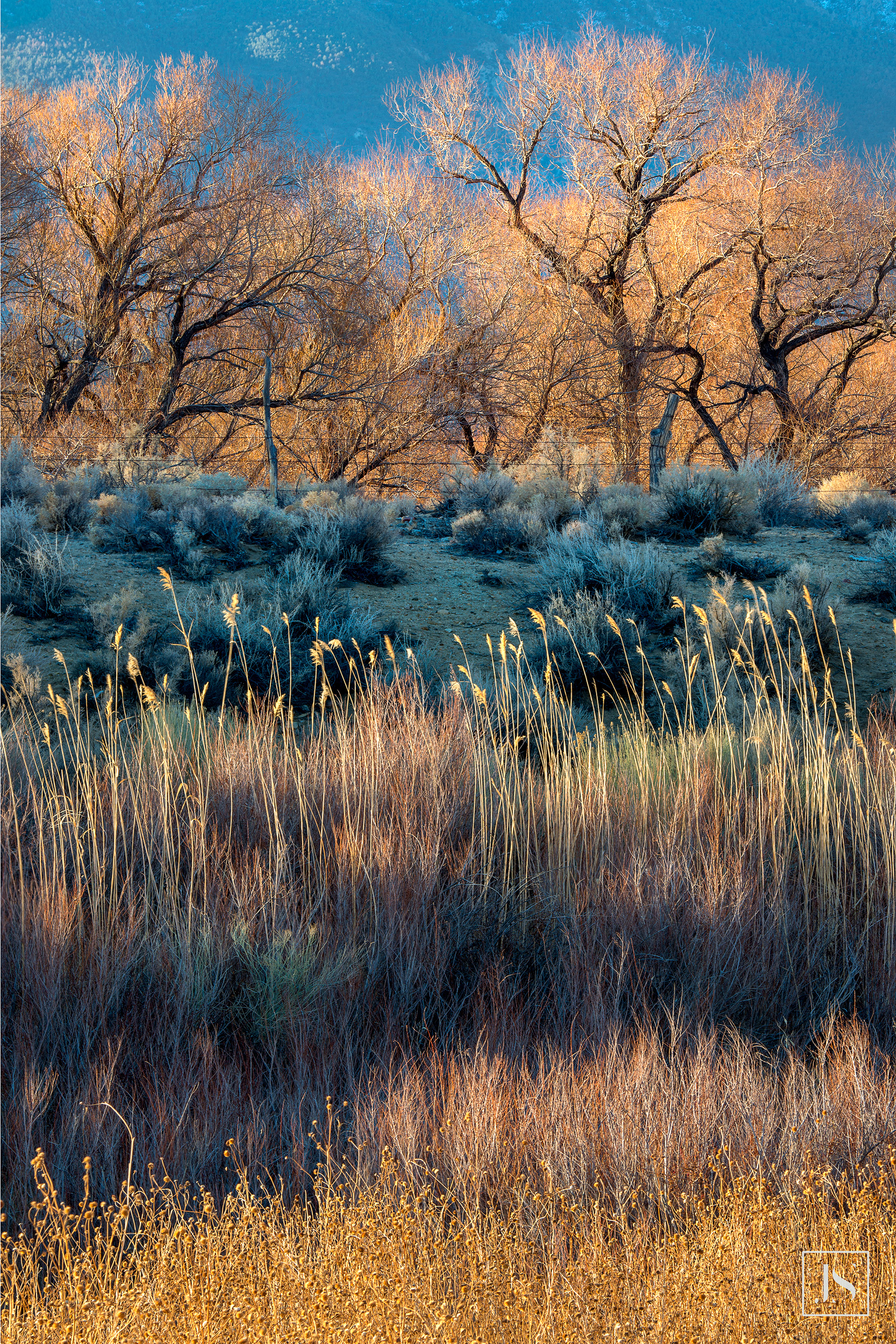 Owens Valley 2, Eastern Sierra-2015