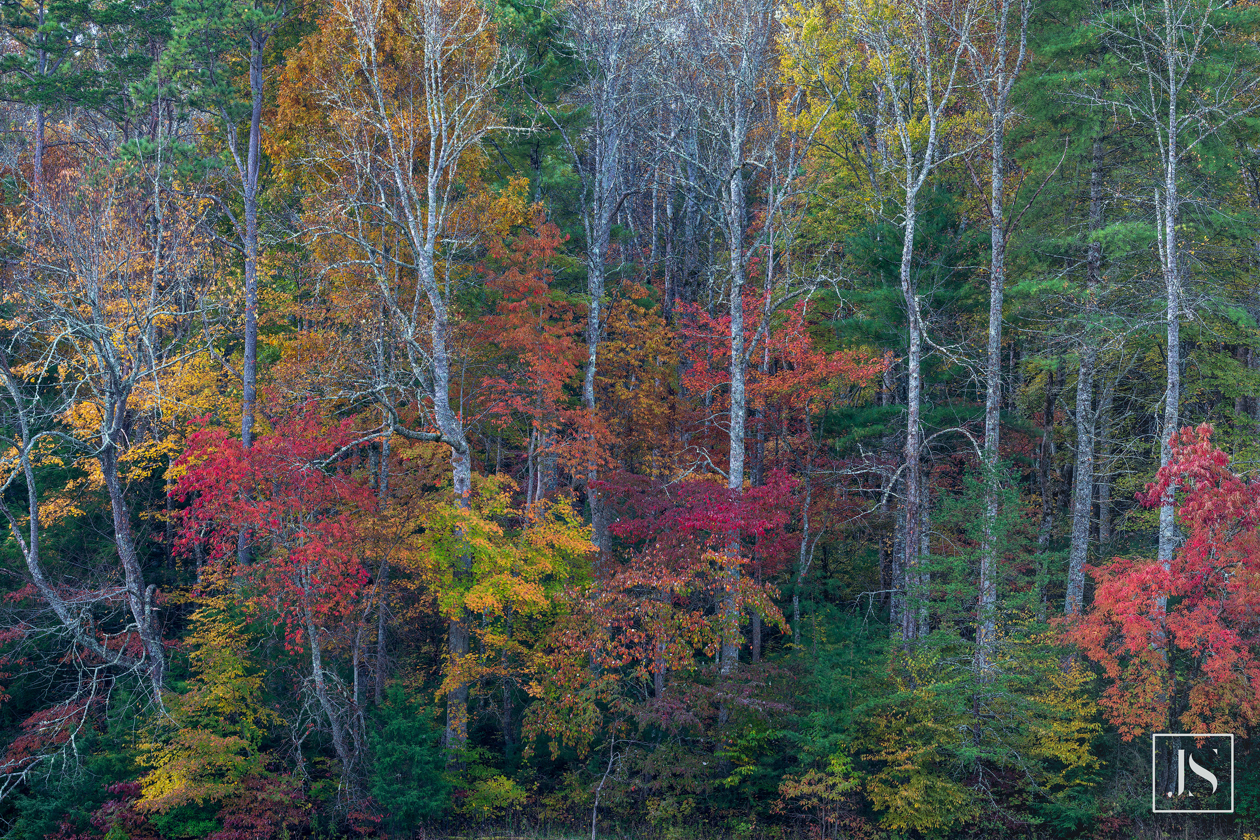Fall Color-Cades Cove-TN