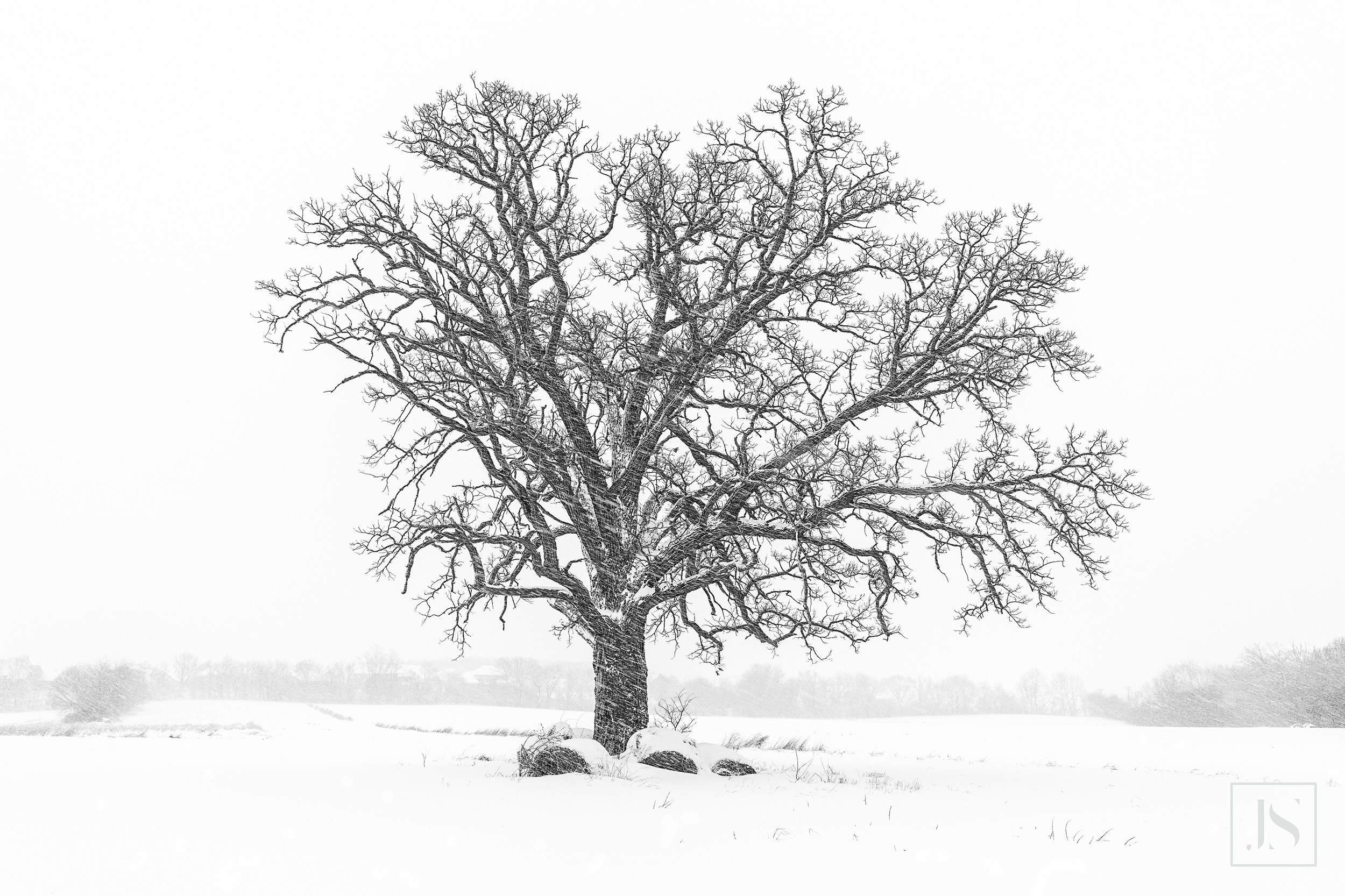 Snow Swept Tree On Farm-Wisconsin