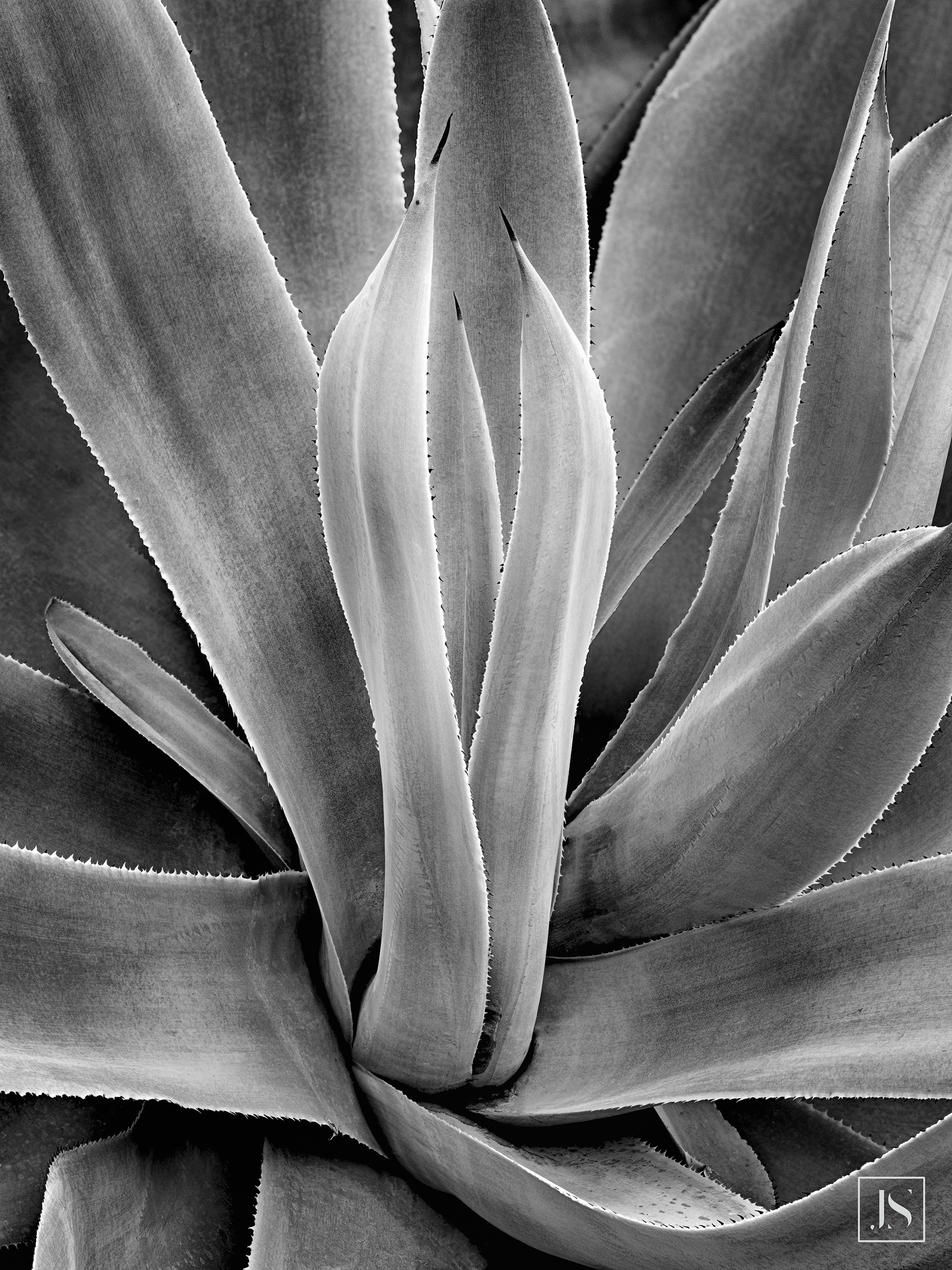 Cactus Plant-Mitchell Domes, WI